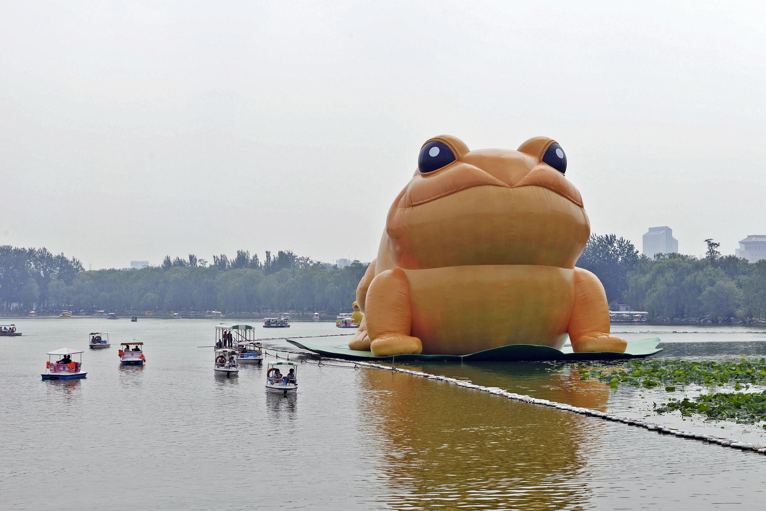 Image: A giant inflatable toad is seen floating on a lake at the Yuyuantan Park in Beijing