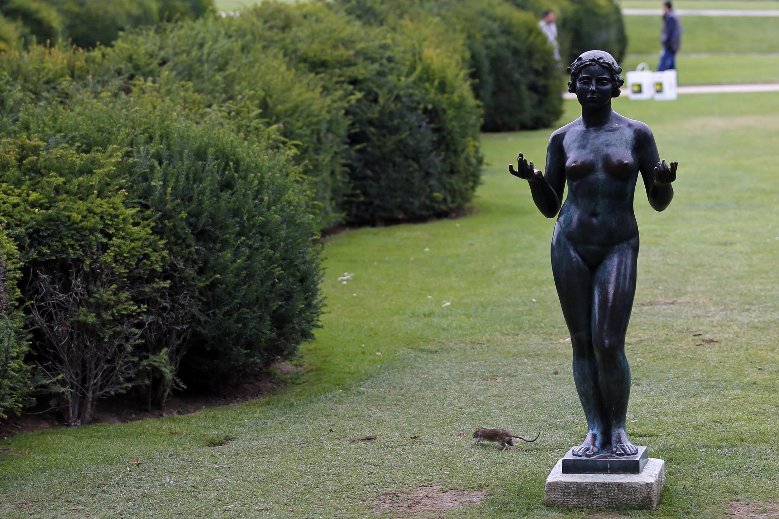 Image: A rat runs next to a Maillol Statue in The Tuileries gardens of the Louvre Muesum in Paris, France, on July 29