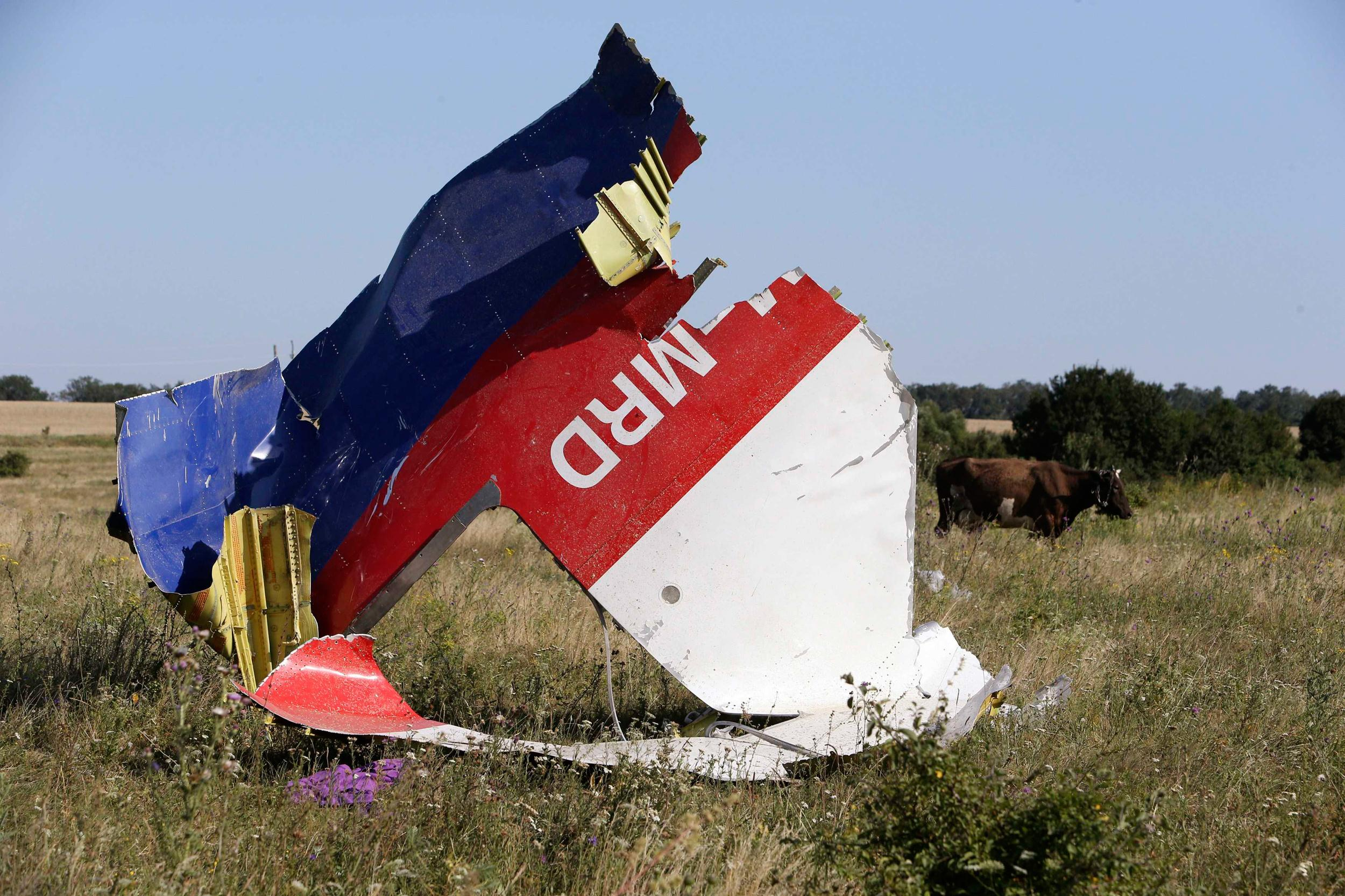 Image: Cows graze near the wreckage at the crash site of Malaysia Airlines Flight MH17 near the village of Hrabove (Grabovo)