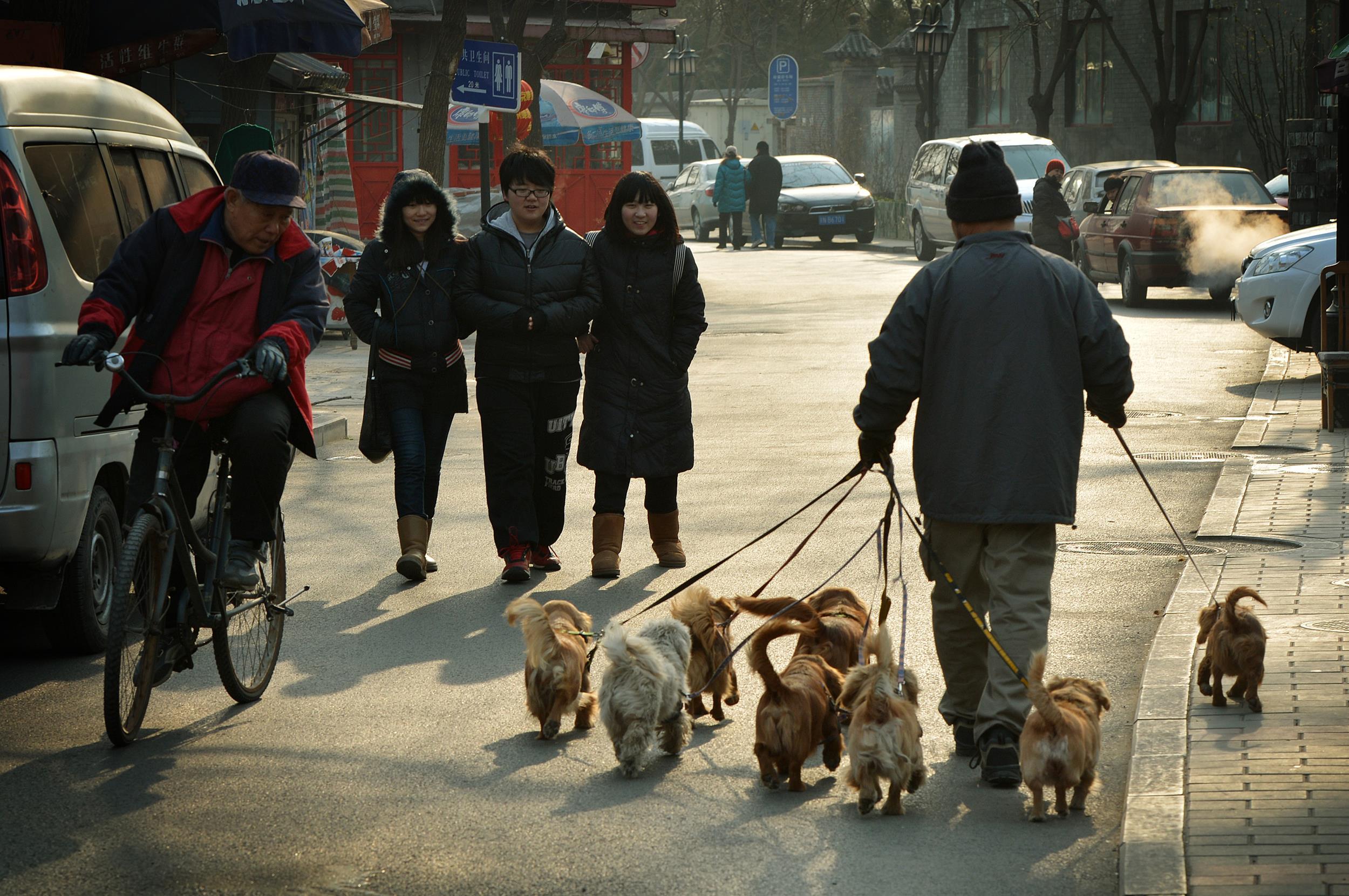 CHINA-LIFESTYLE-PETS