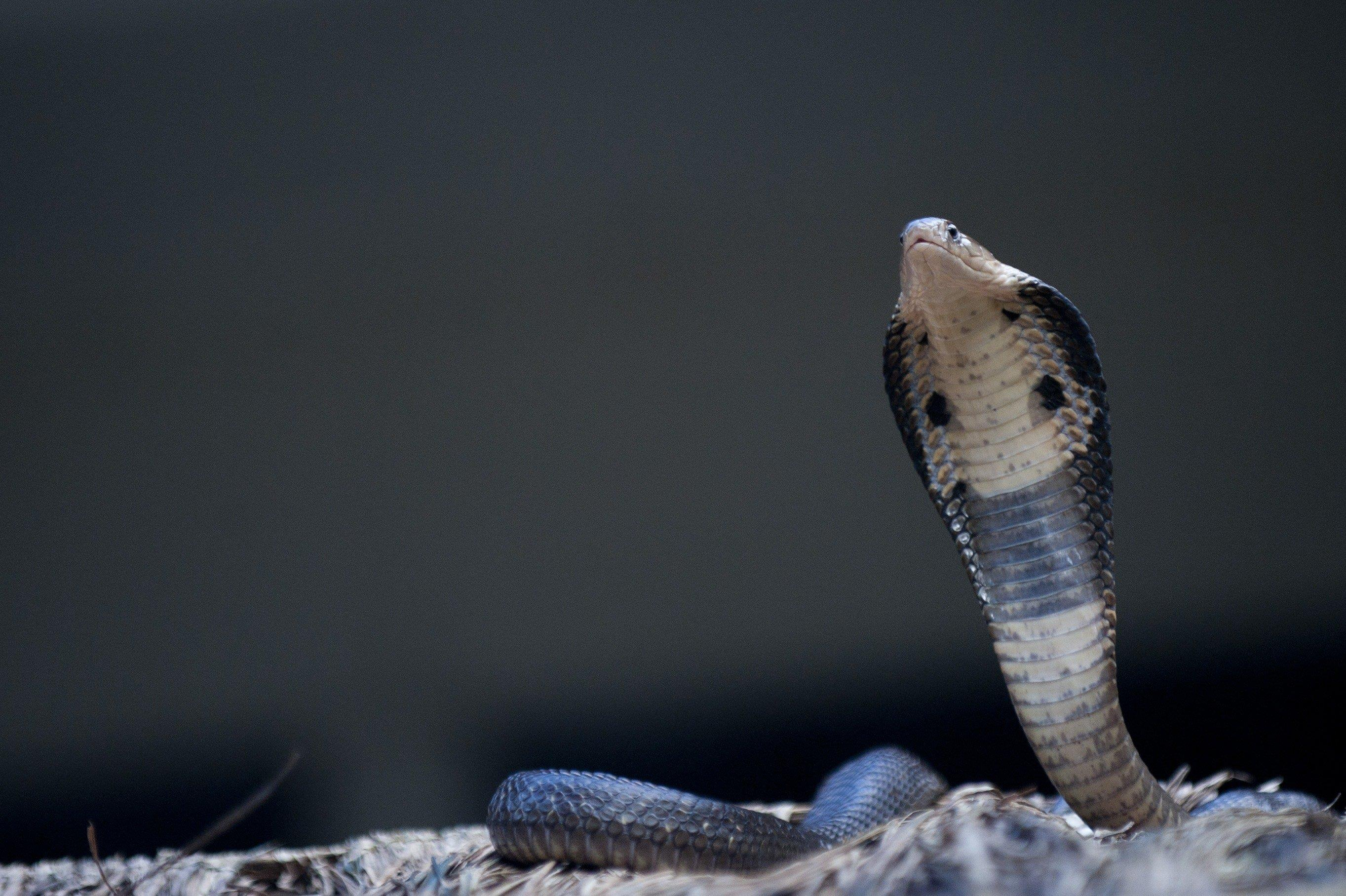 Five head snake photos 142 best Antique Milk Containers images by Kathy Drury on