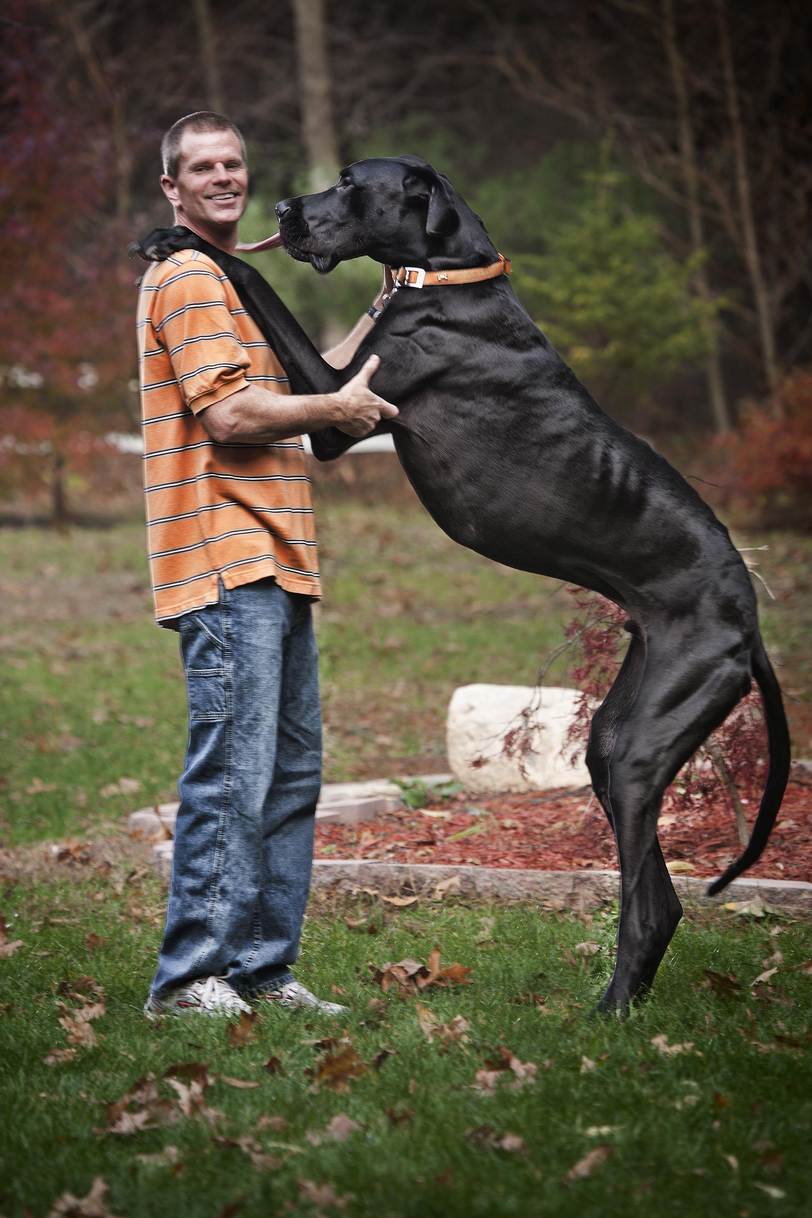 Tallest dog in the world - photo#2