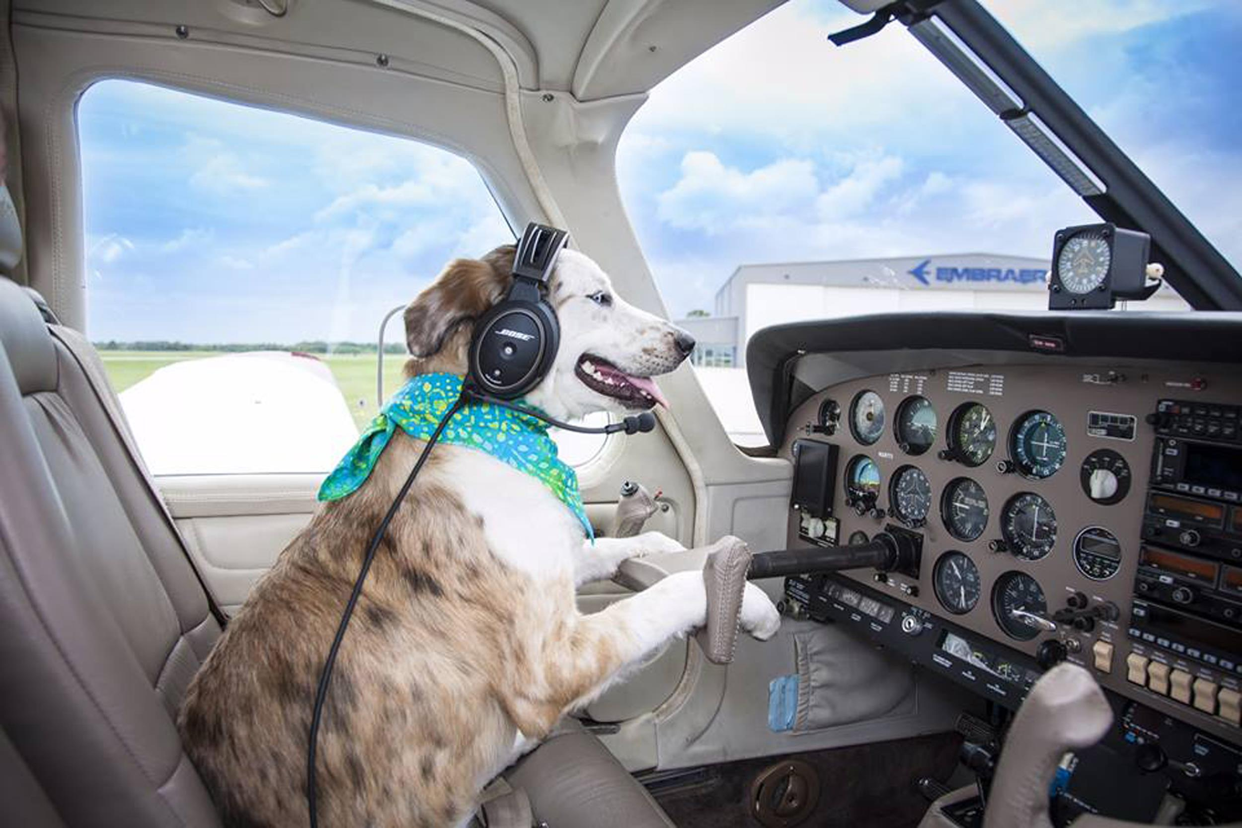 Group Pairs Pilots With Pooches To Fly Them To Forever