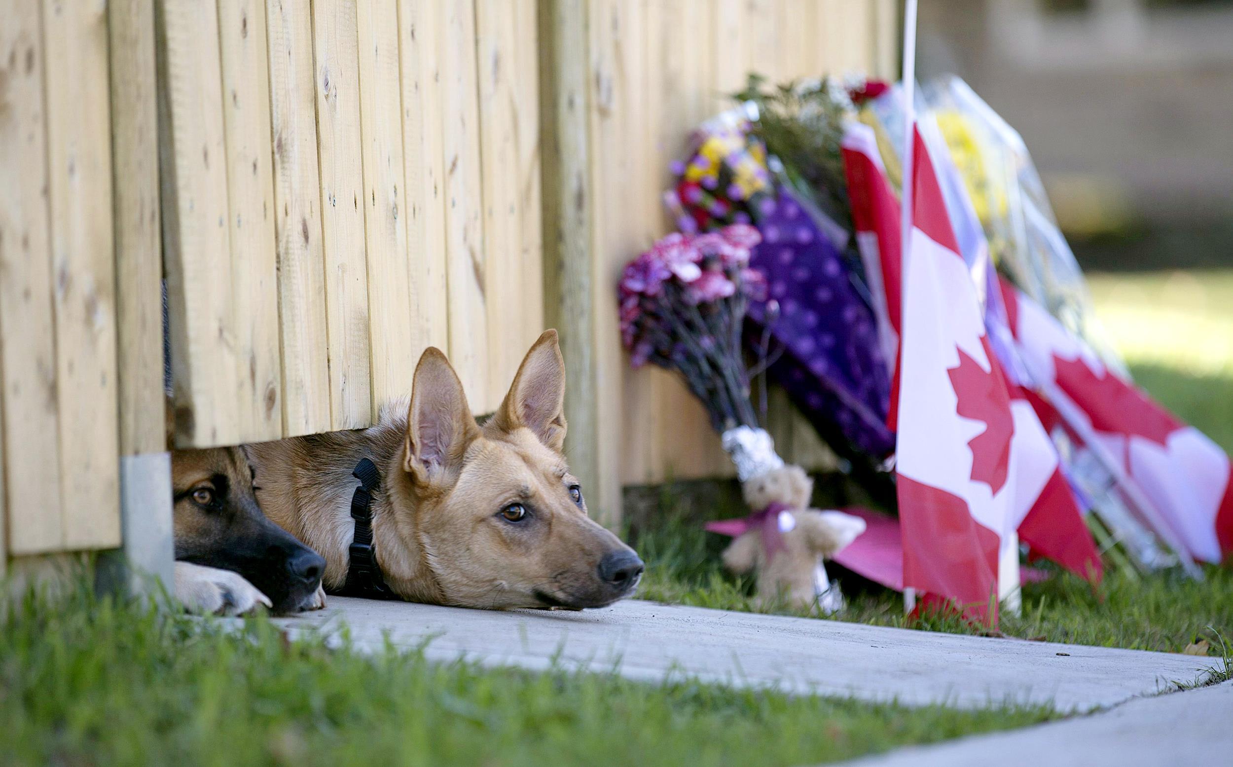 Forever Faithful Slain Soldier S Dogs Wait For Master S