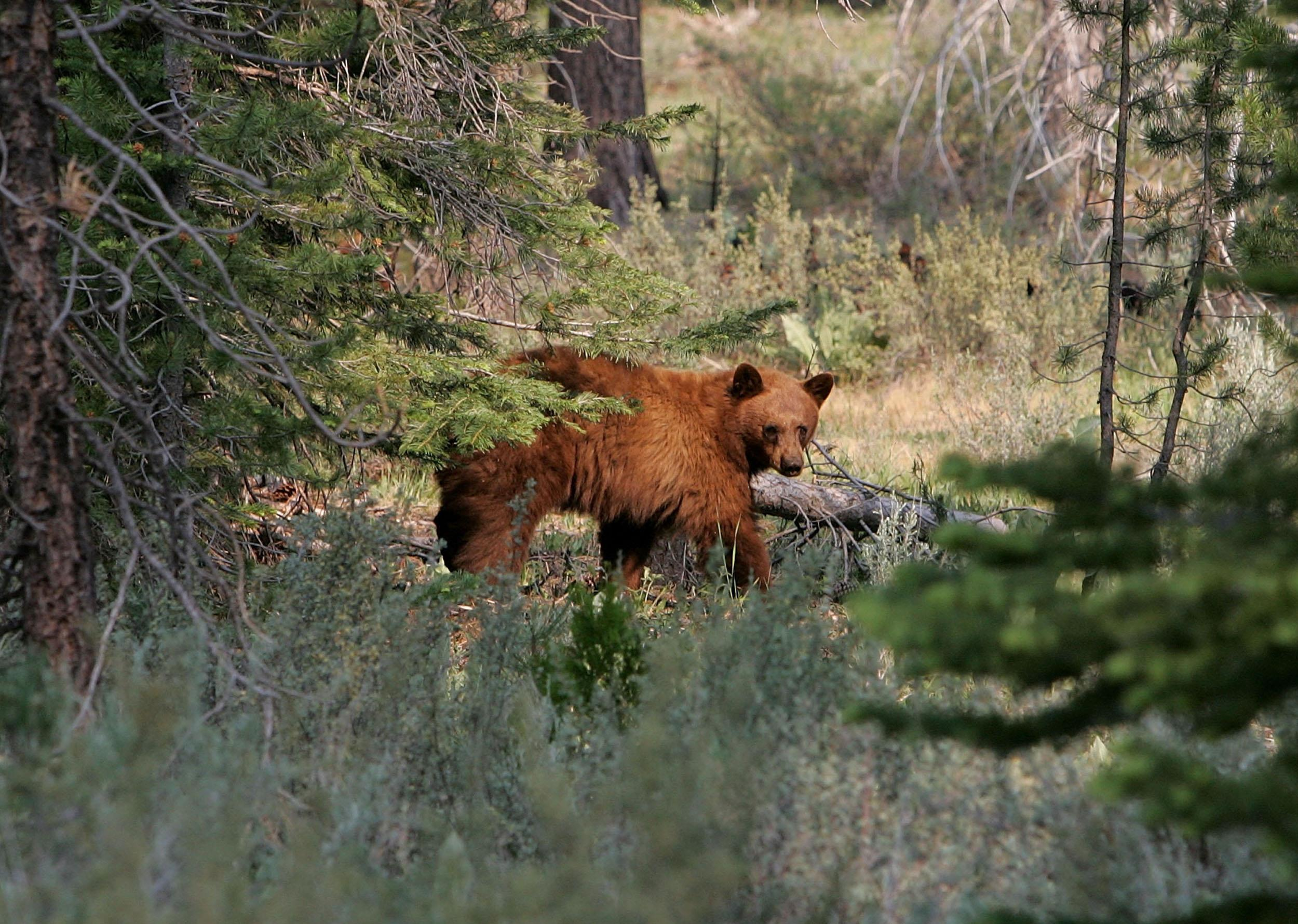 Surge in Bear Selfies Could Lead to a Grizzly End: Forest Service