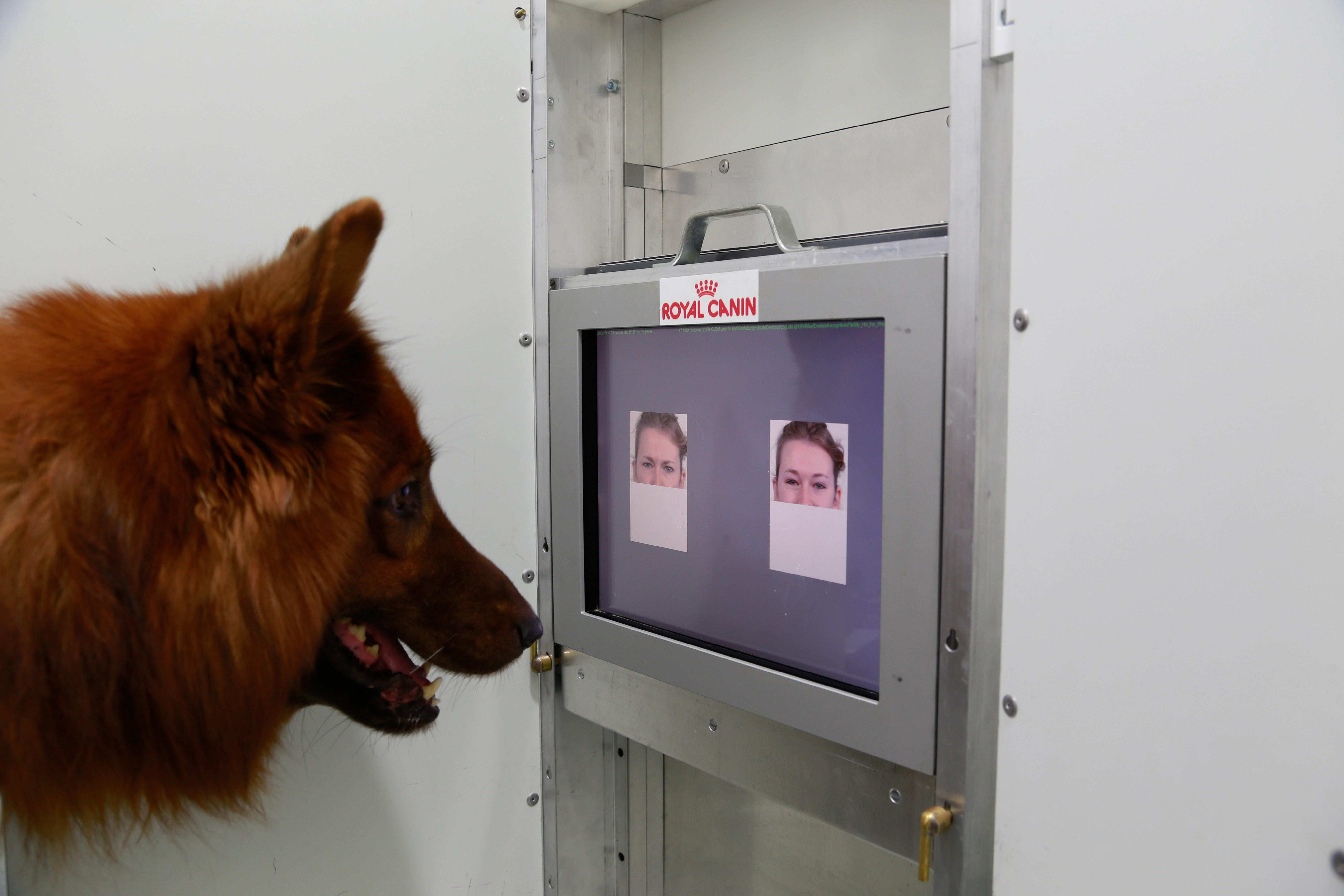 Dogs Distinguish Human Faces