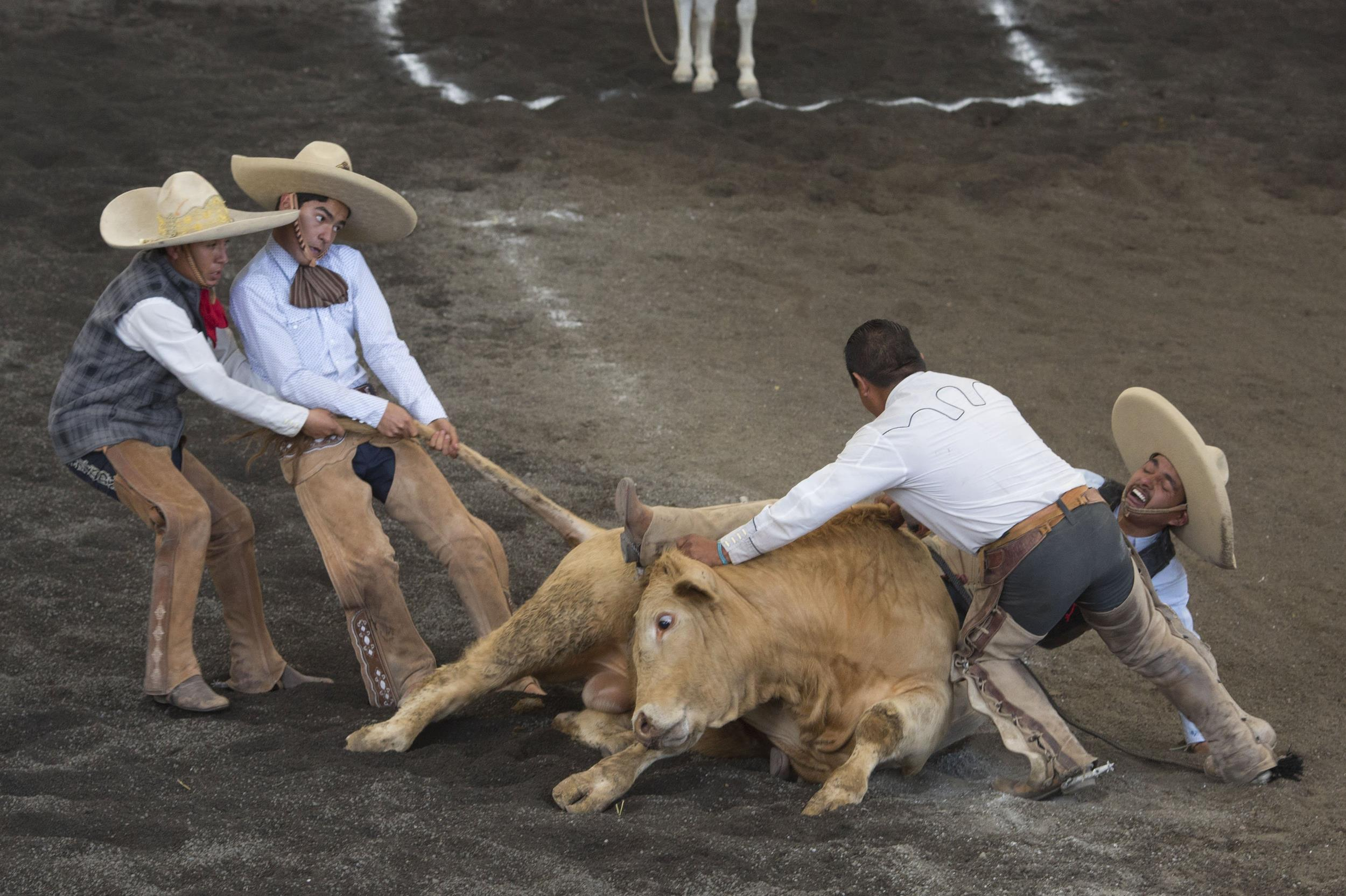 Charros Honor Mexico S Rodeo Roots Nbc News