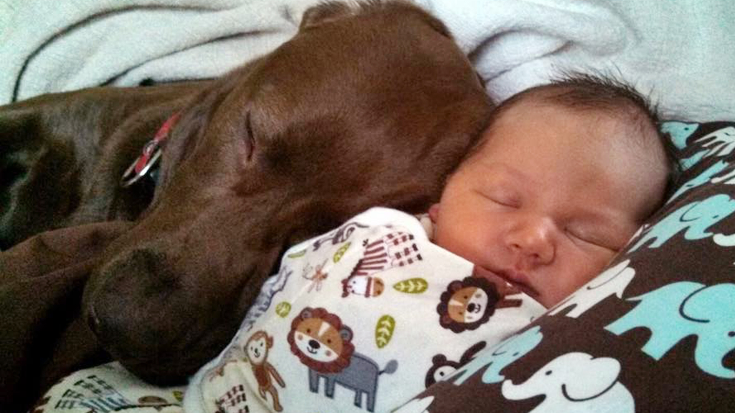 Babies and dogs! 22 photos of babies meeting pets