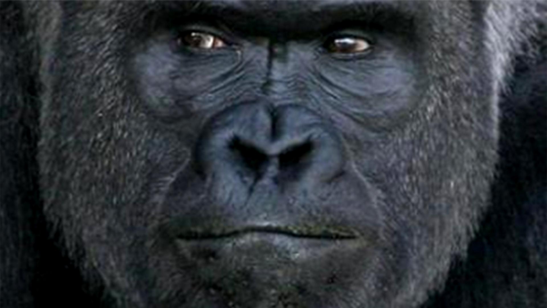 Gorilla boner hentia movie