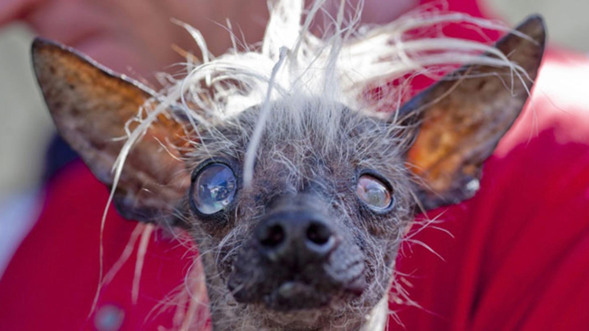 Ugliest Dog Breed Ever