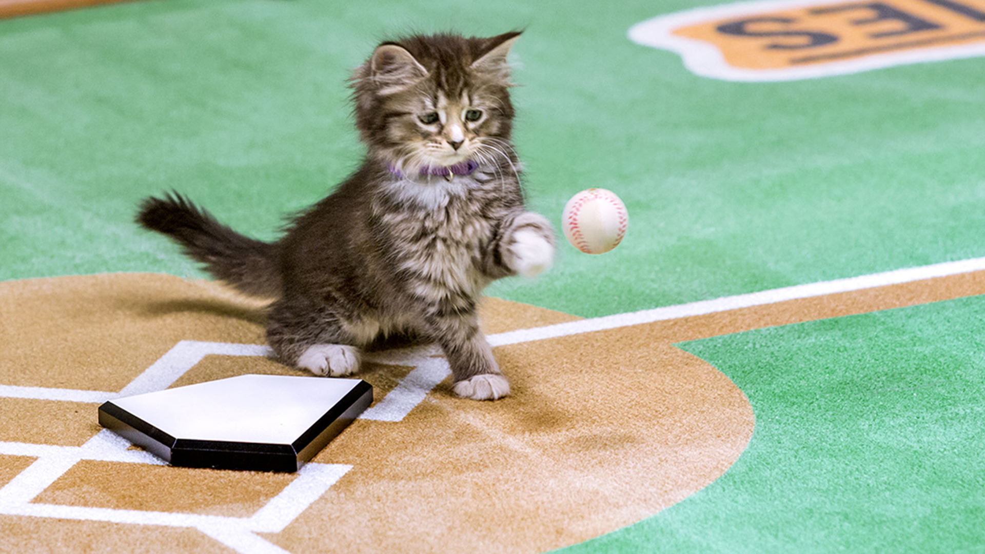 Kittens play baseball in Paw Star Game on Hallmark Channel