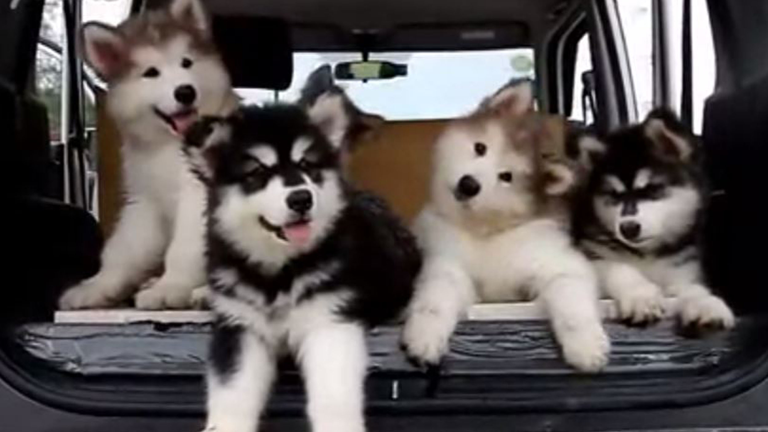 Just Try Not To Smile While You Watch These Dancing Puppies
