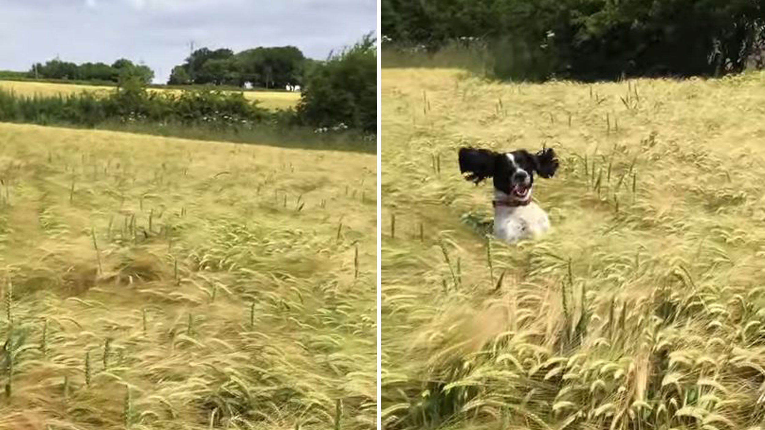 Electra Viral Video Dog