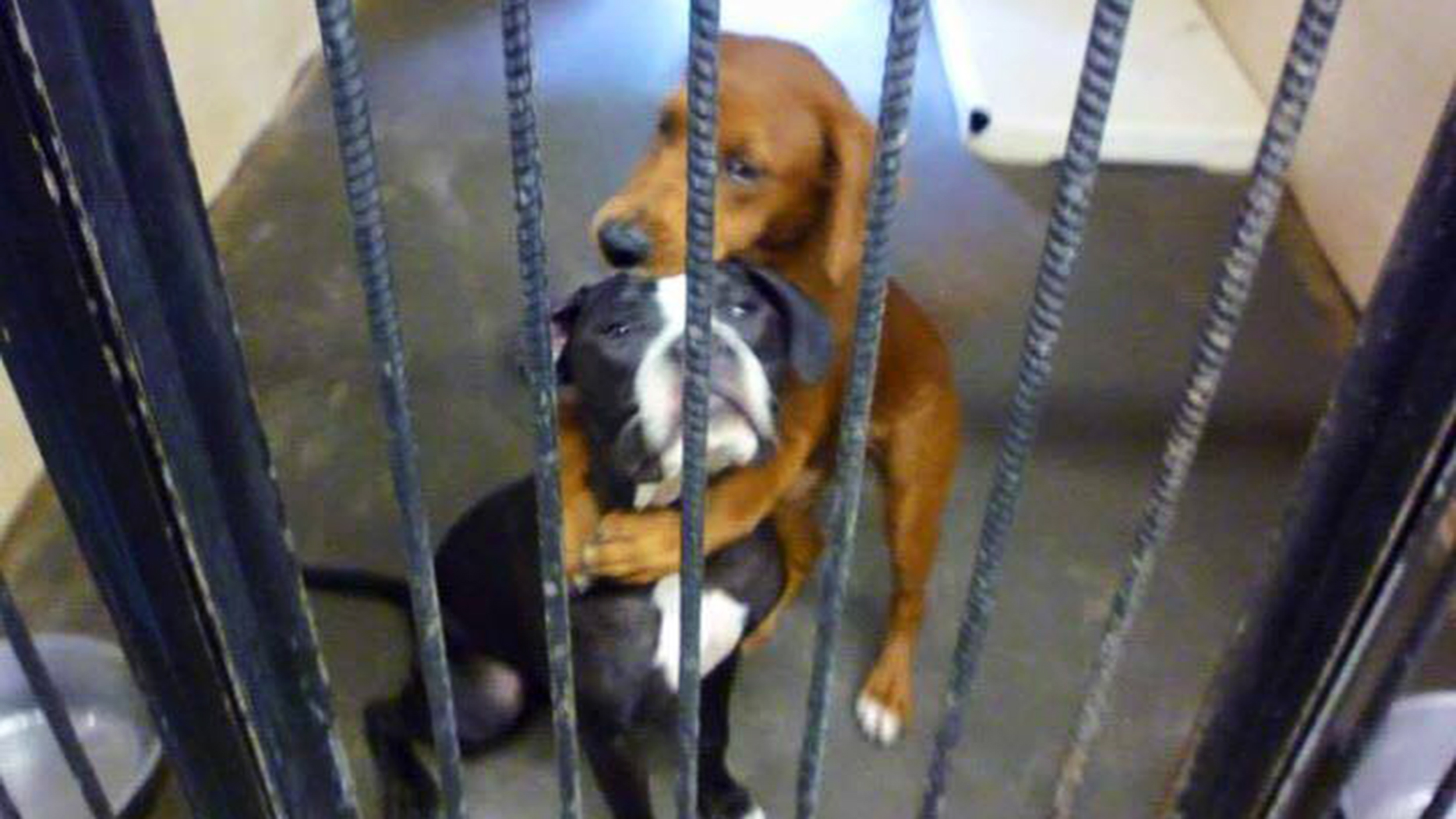 Hugging dogs saved from kill shelter are still up for adoption