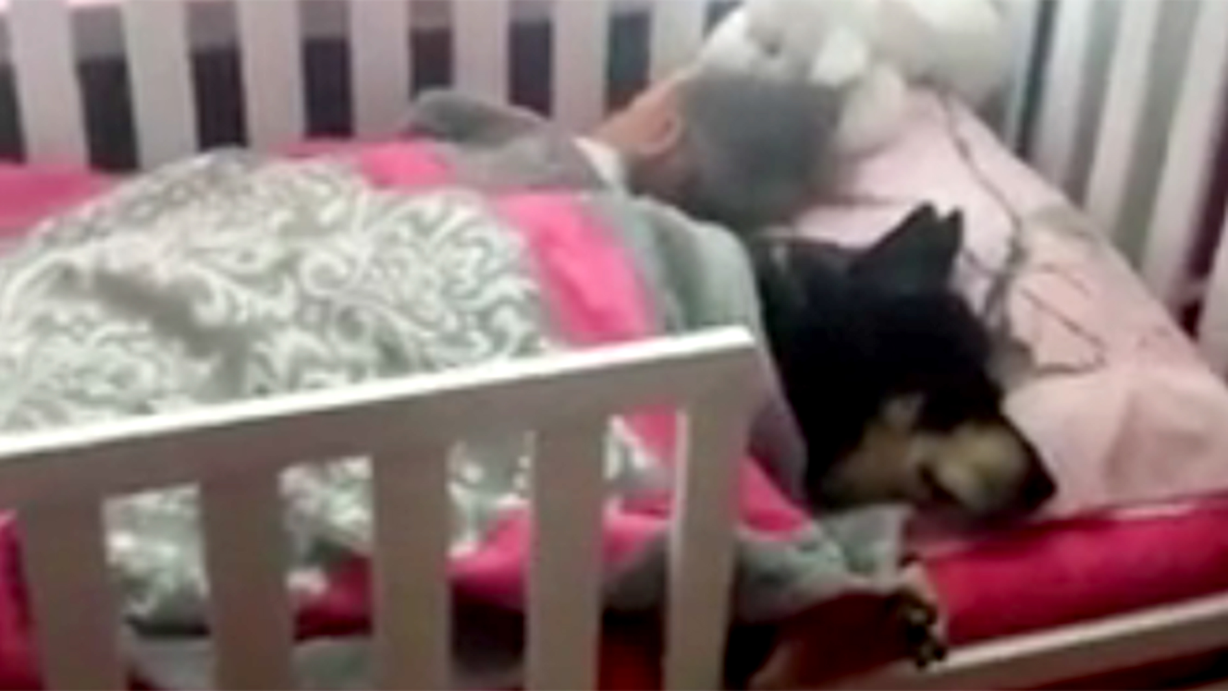 Dog Naps In Bed With Sleeping Toddler In Adorable Video