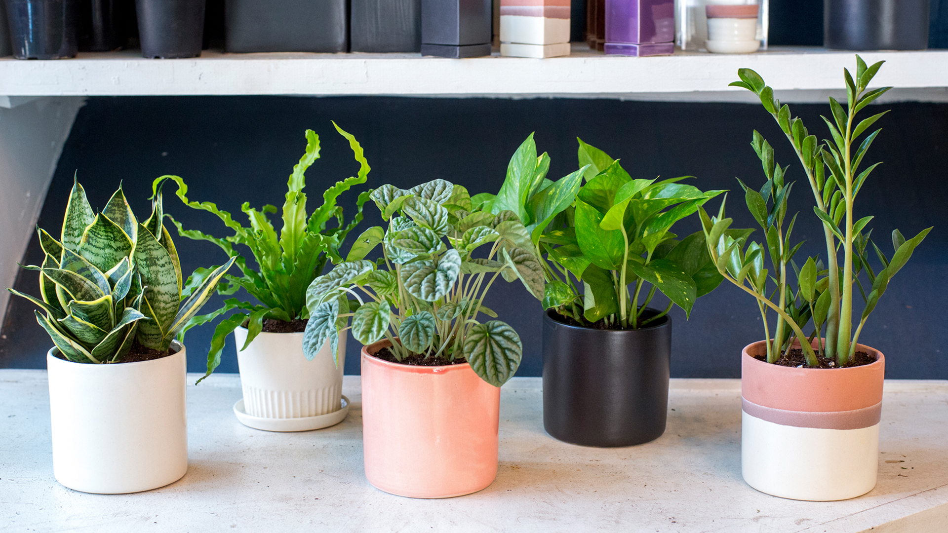 Indoor houseplants you can 39 t kill unless you try really for Office plants no natural light