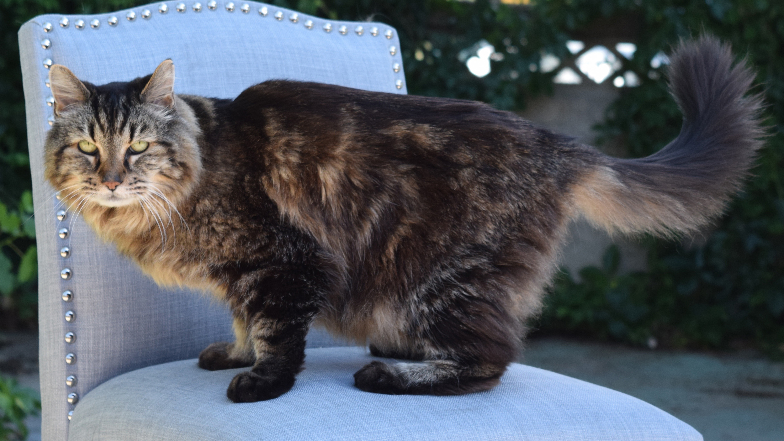 meet corduroy the worlds oldest living cat