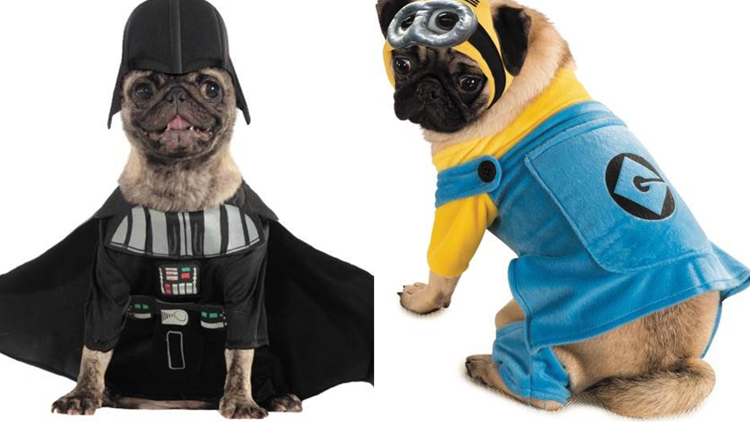 The most popular Halloween costumes for pets, from 'Star Wars' to ...