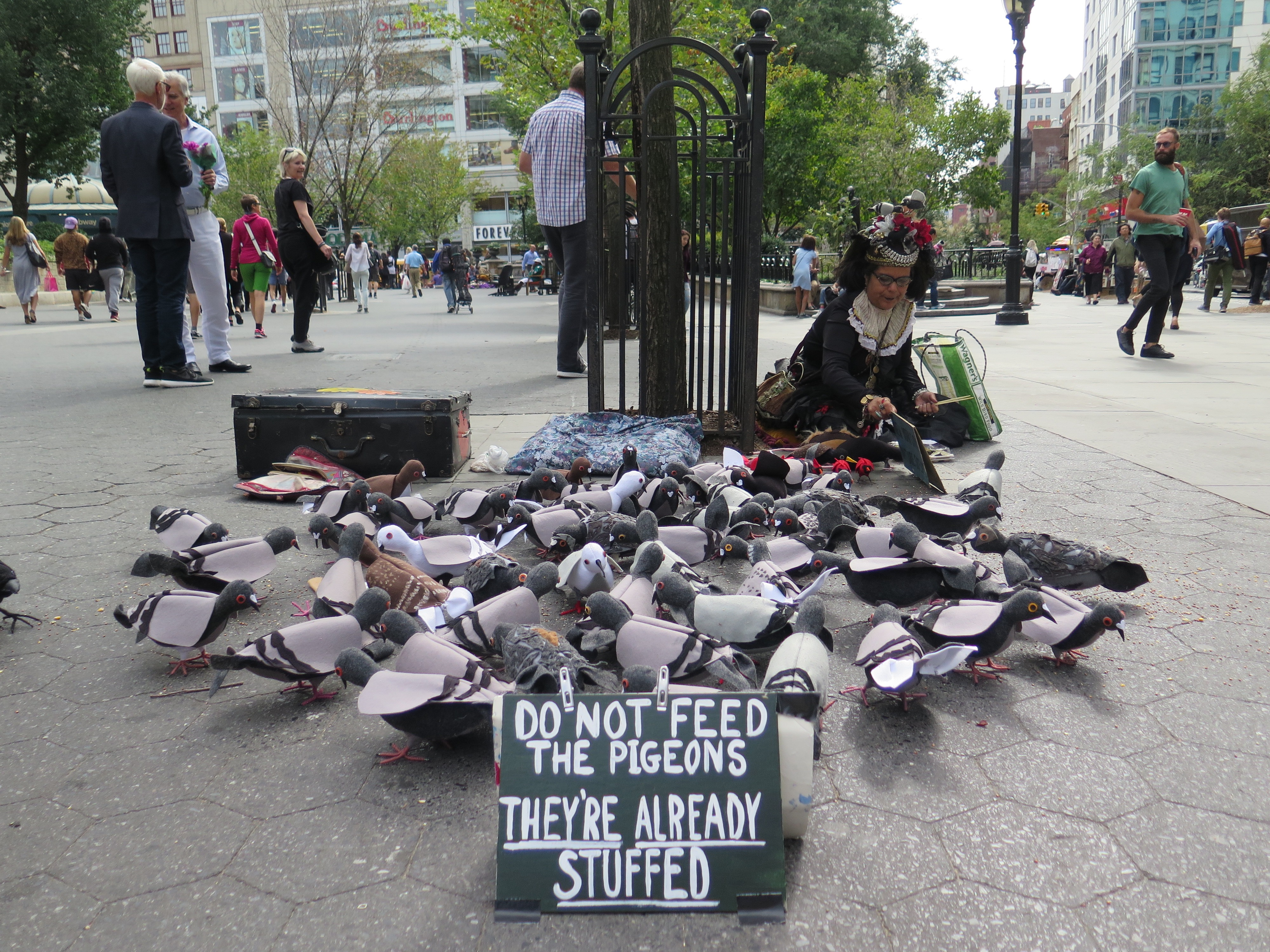 What to feed the pigeons