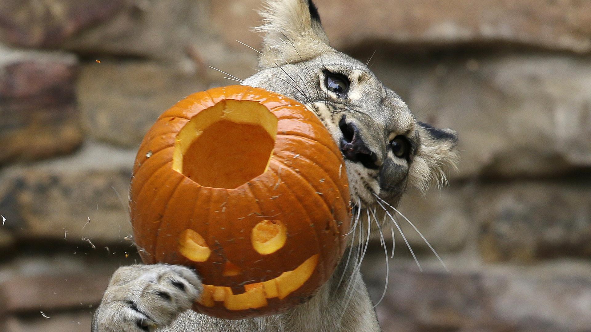 Октябрь картинки прикольные, фото приколы анекдоты