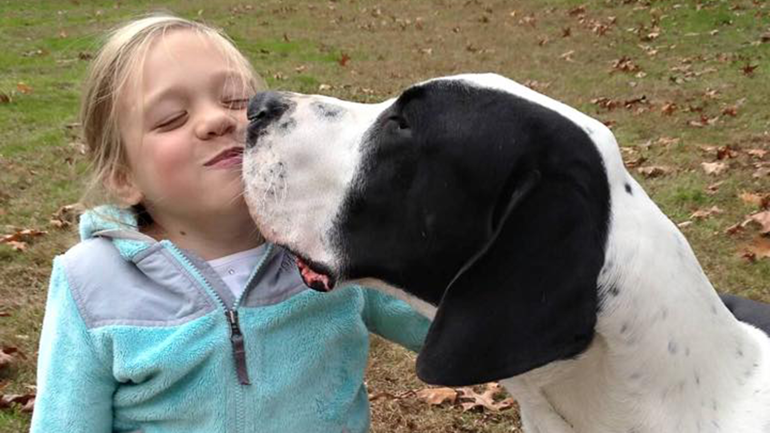 Great Dane service dog helps girl with rare disorder walk