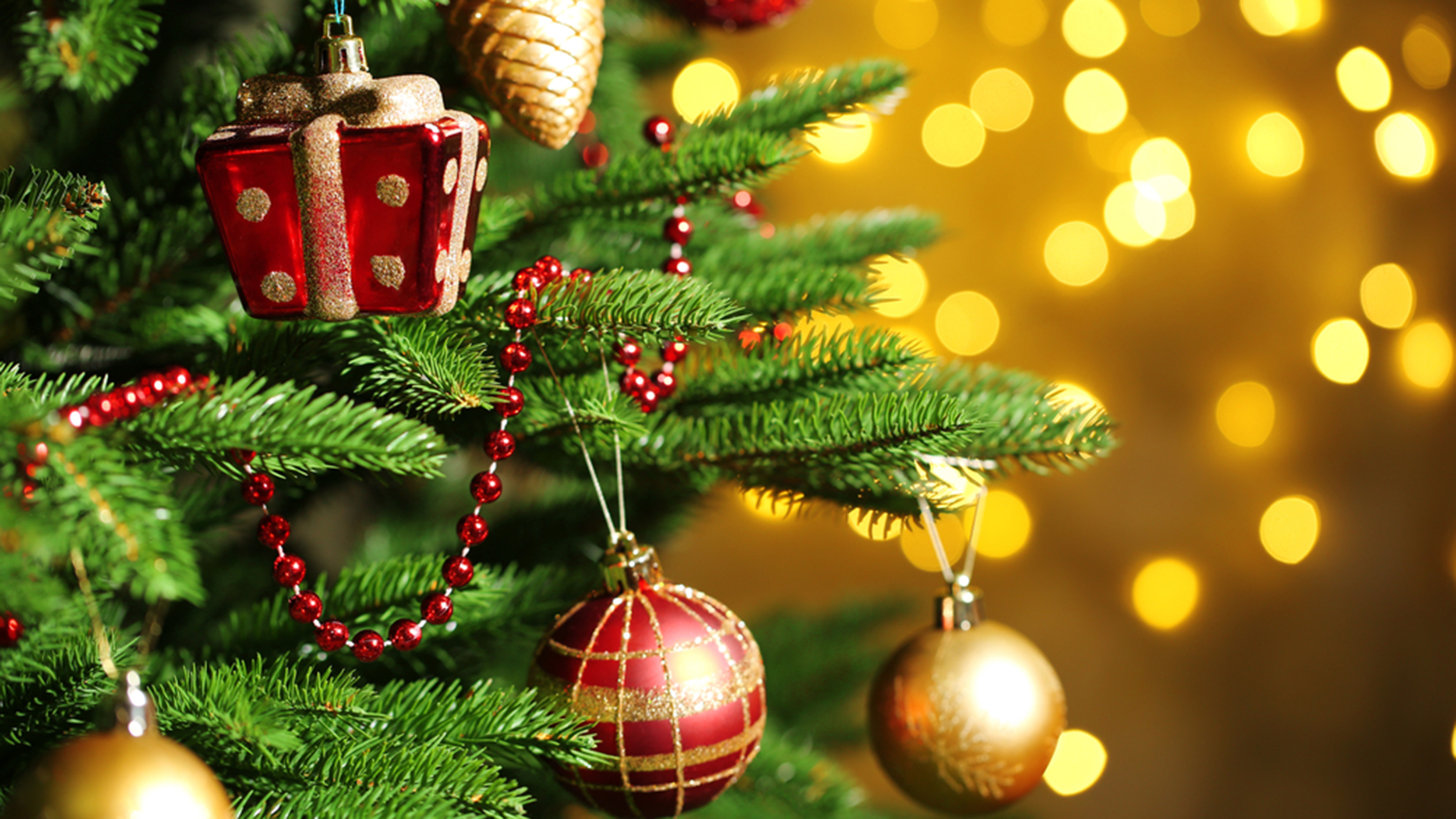 How to pick and buy the best Christmas tree ever - TODAY.com