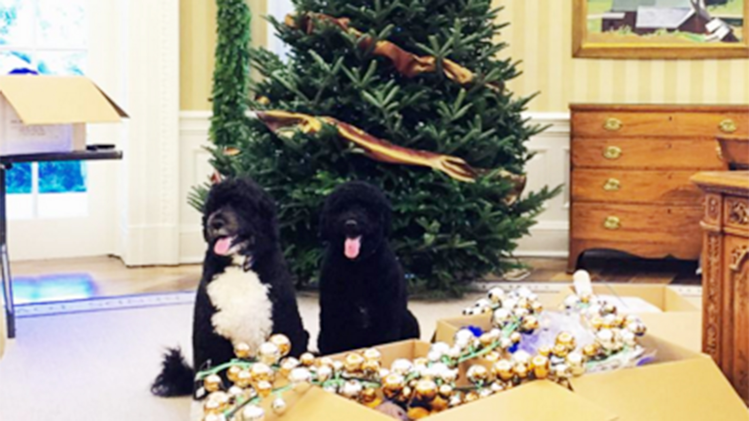 Superbe First Dogs Bo And Sunny Help Deck The White House Halls For Christmas