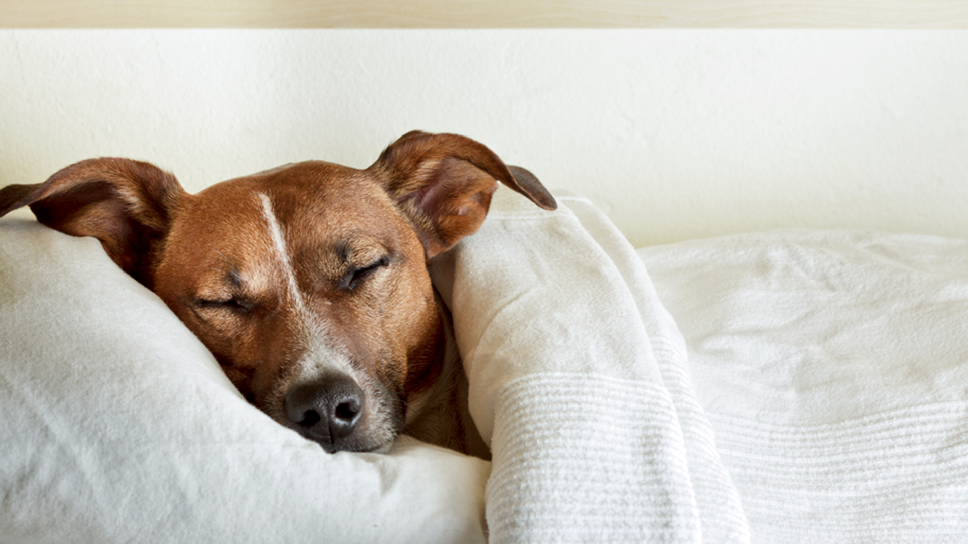 Want Better Sleep Maybe Let Your Dog In The Bedroom After