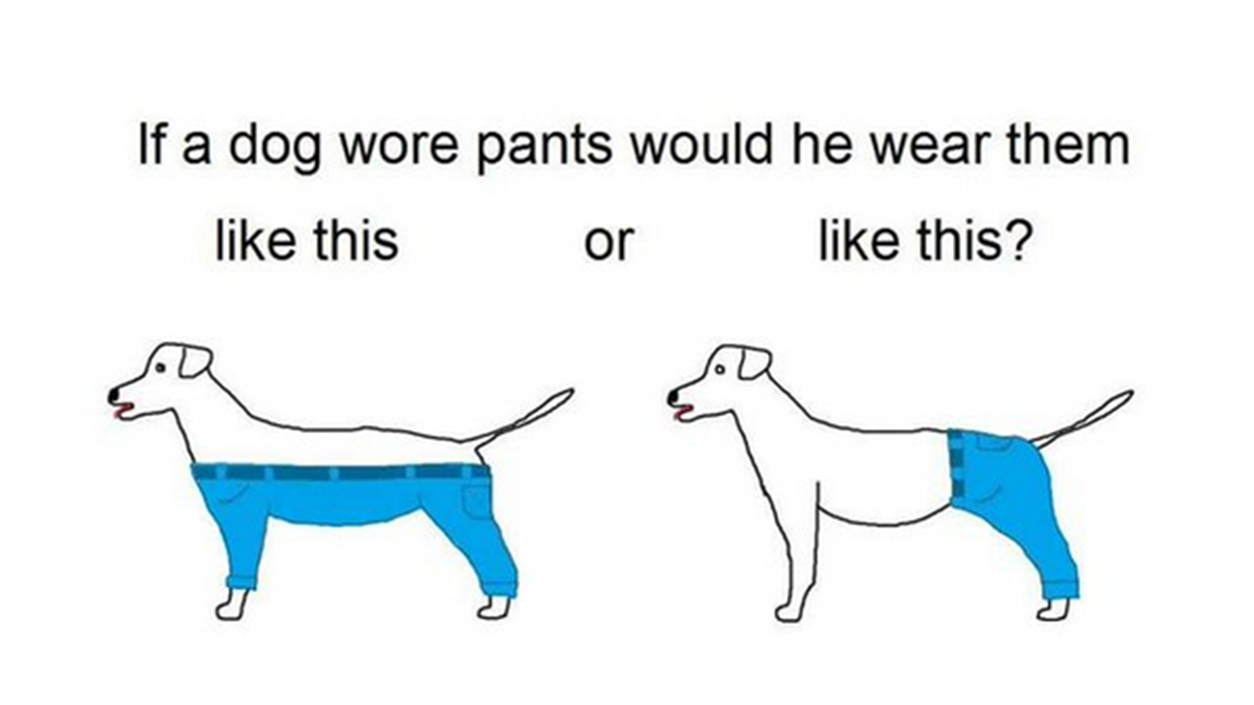 Why Does My Cat Pant Like A Dog