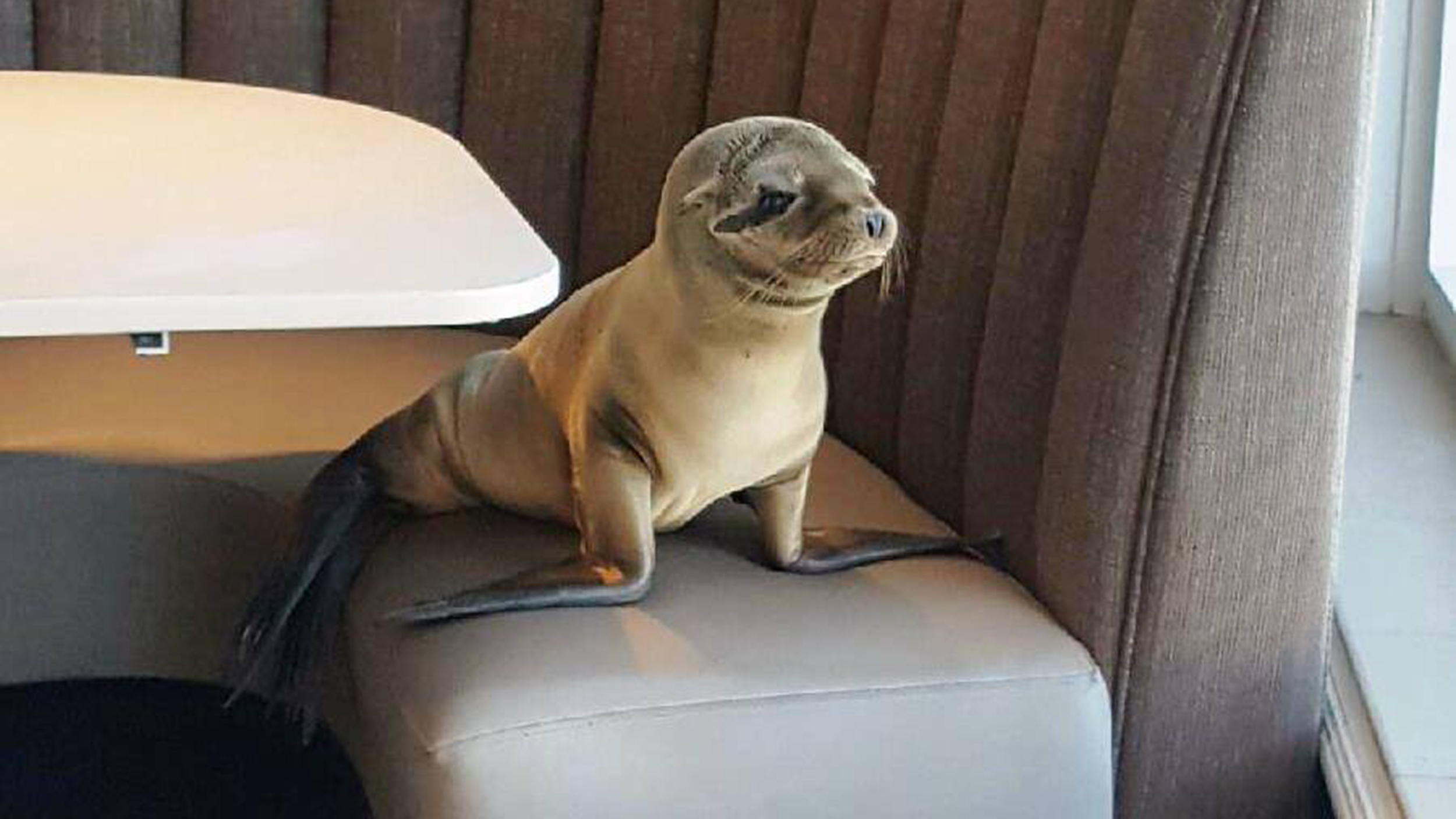Sea Lion Rescued After Being Found In Booth At San Diego