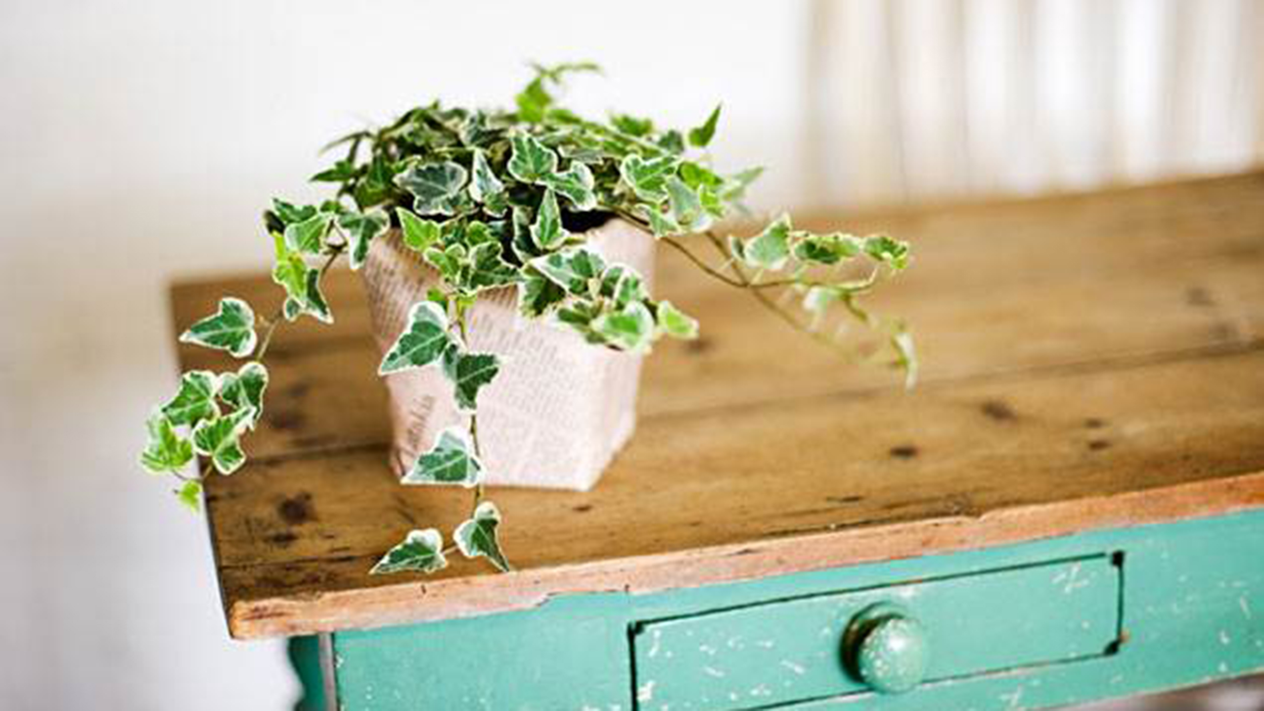The Easiest Indoor House Plants That Wont Die On You