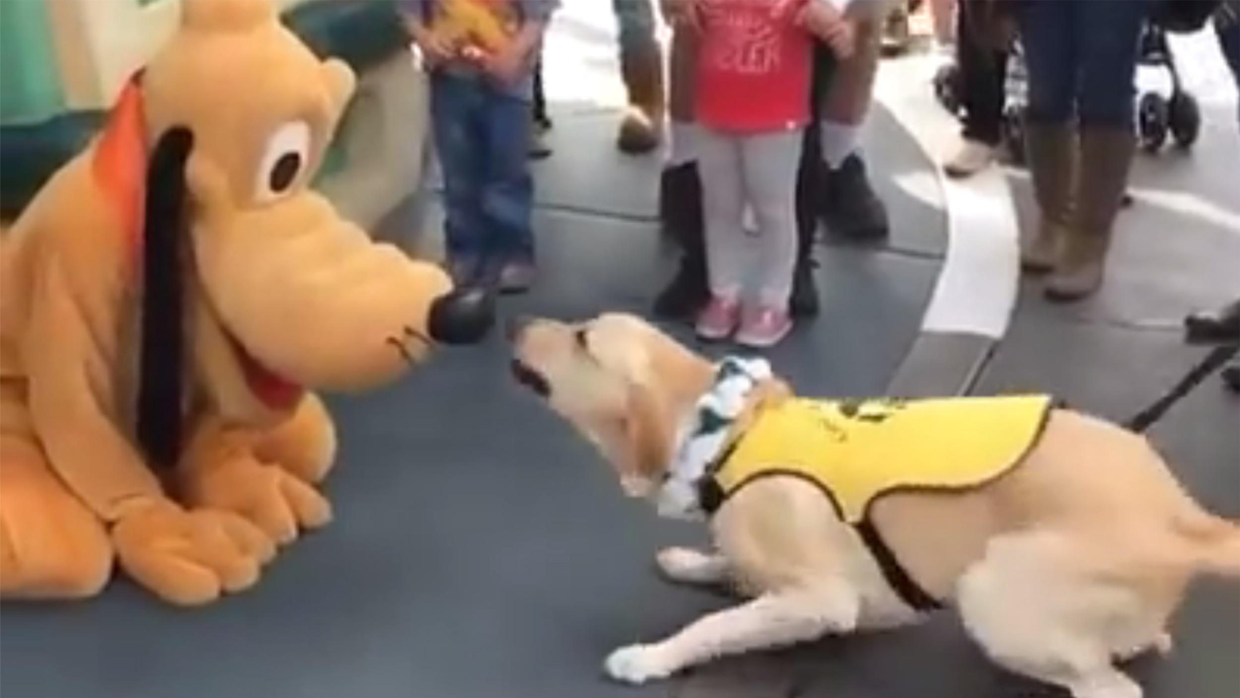 Service Dog Behavior