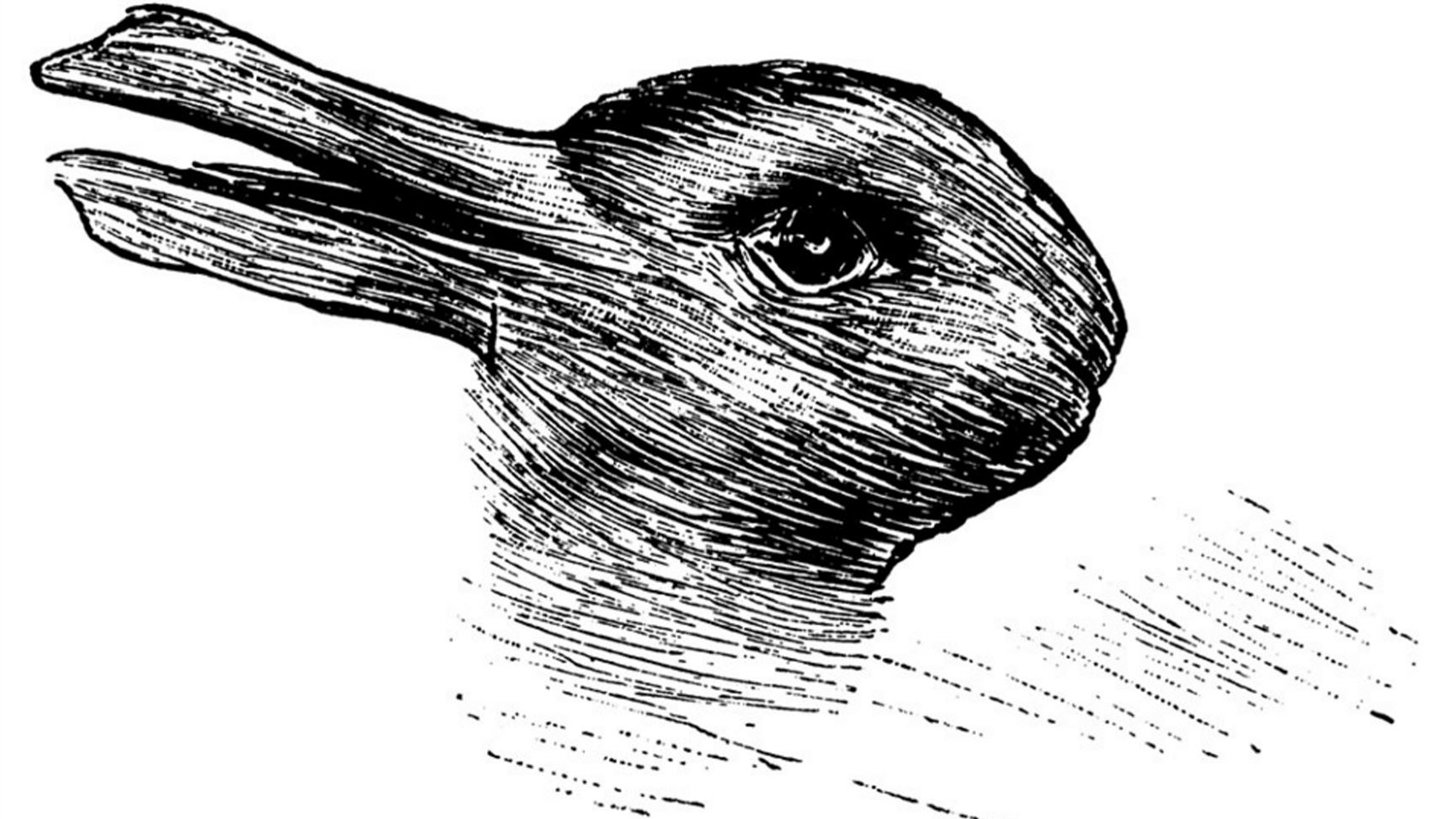 Rabbit Or Duck? This 124yearold Drawing Has Both If You Can Spot Them   Today