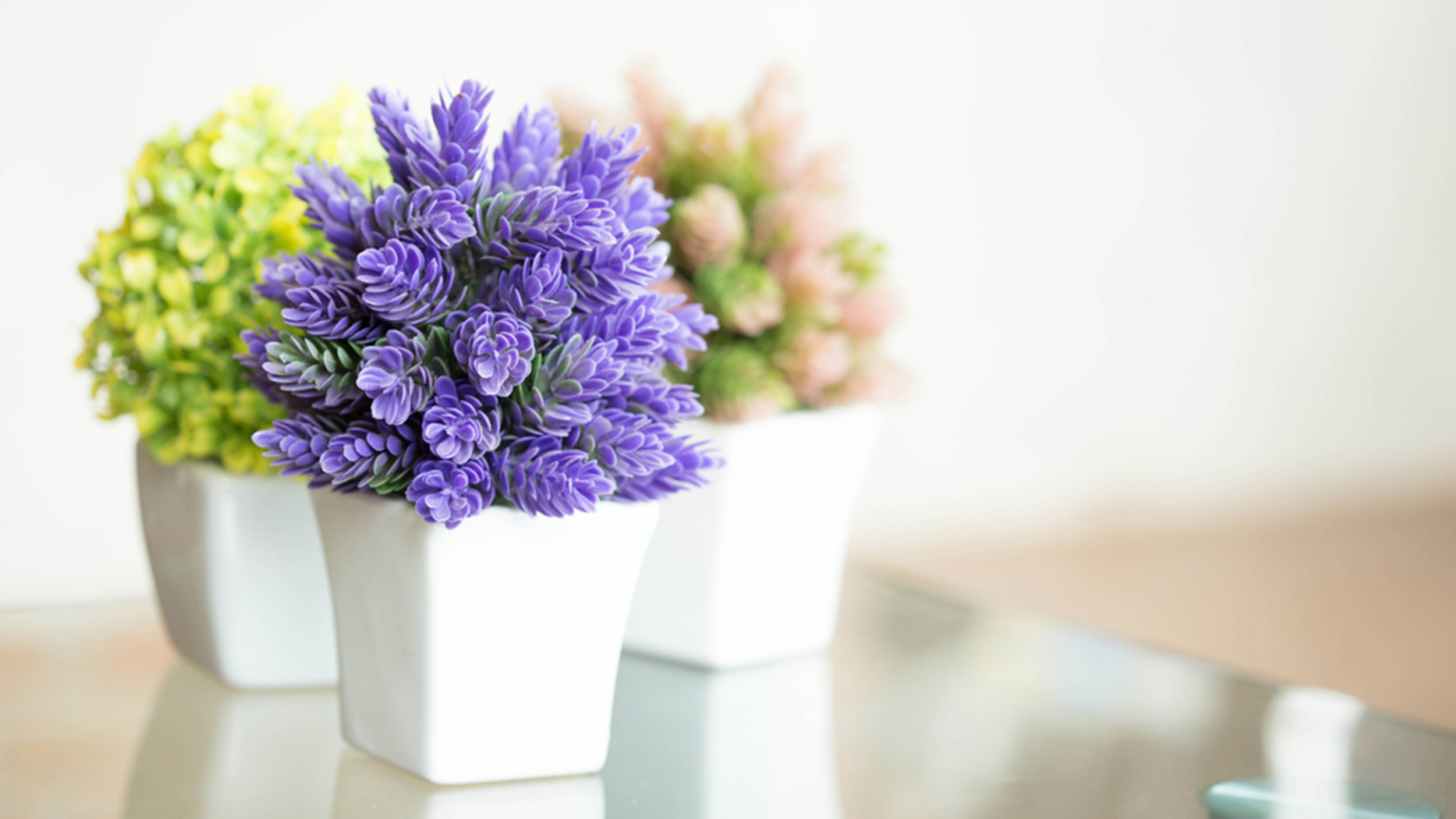 Pretty indoor flowering plants for Good plants to have indoors