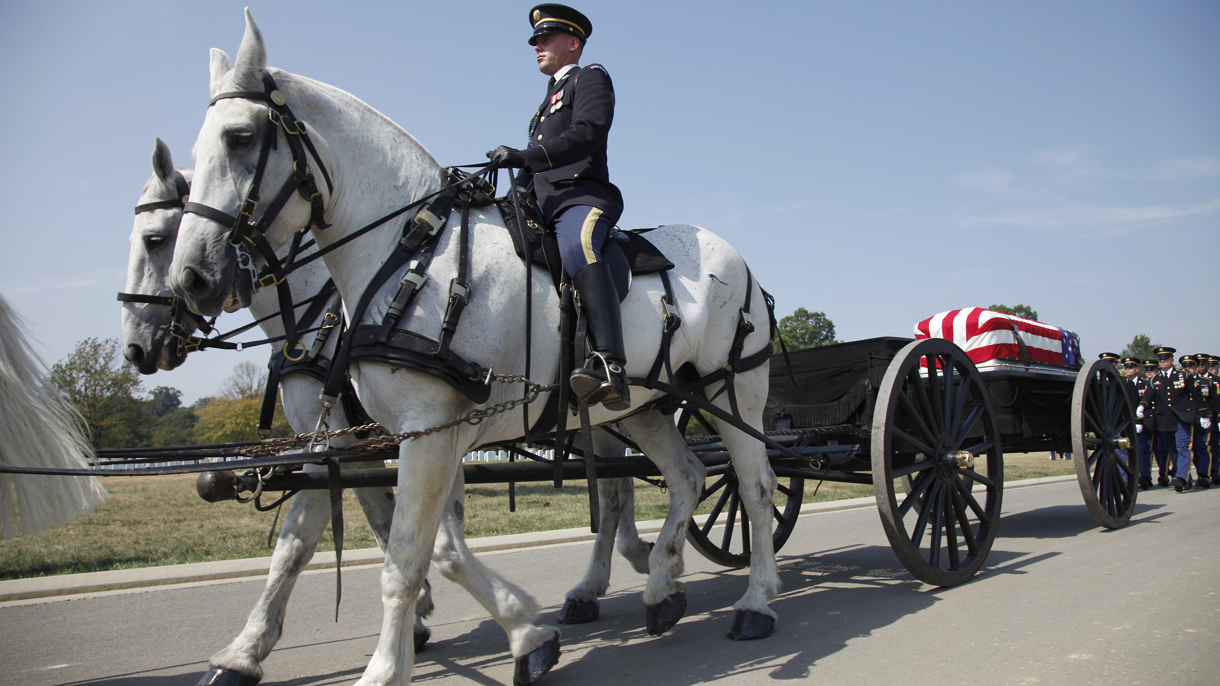Former Military Horses Are Up For Adoption For Free If