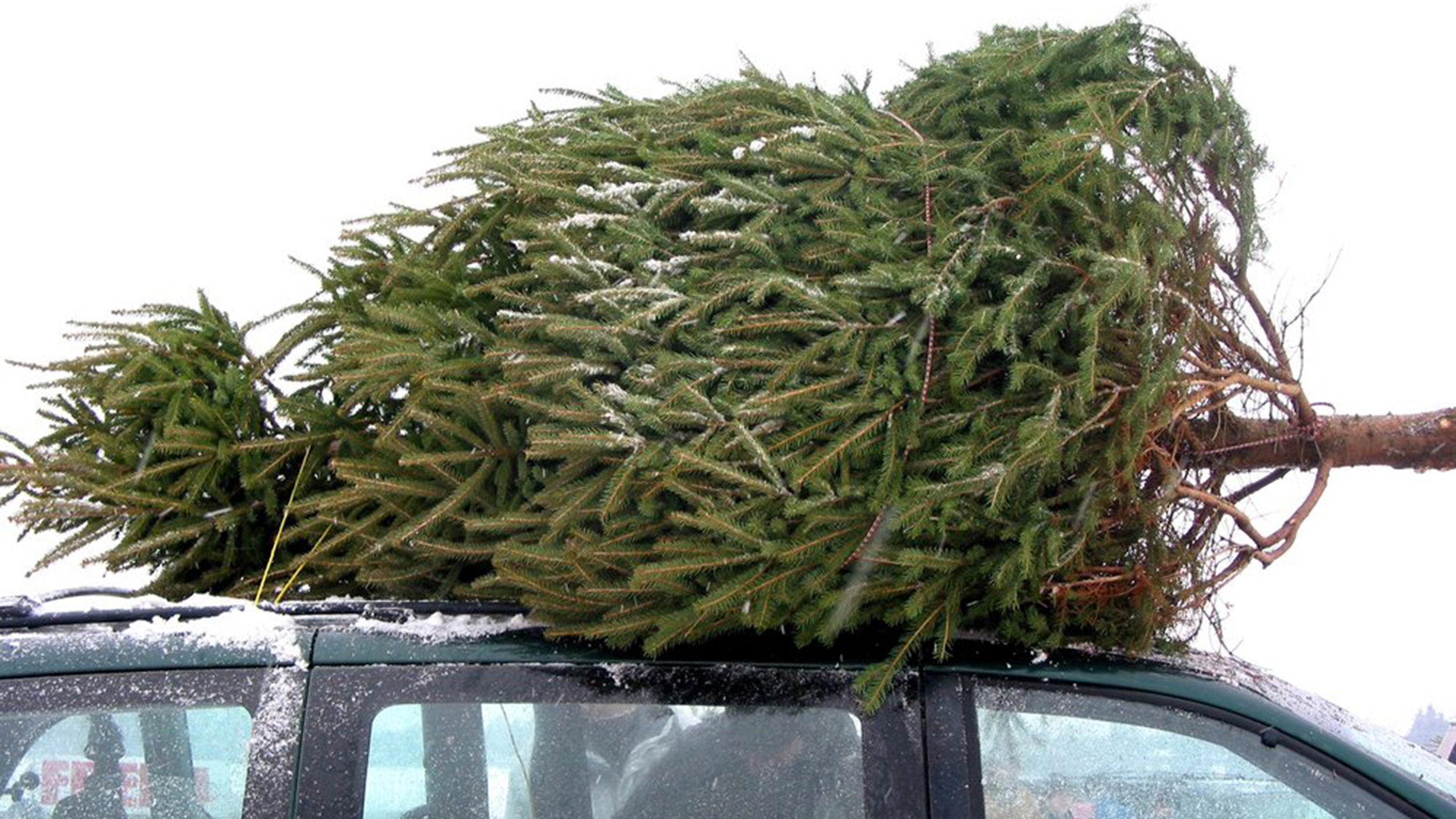 how to buy and take care of your christmas tree todaycom - Buy Christmas Tree