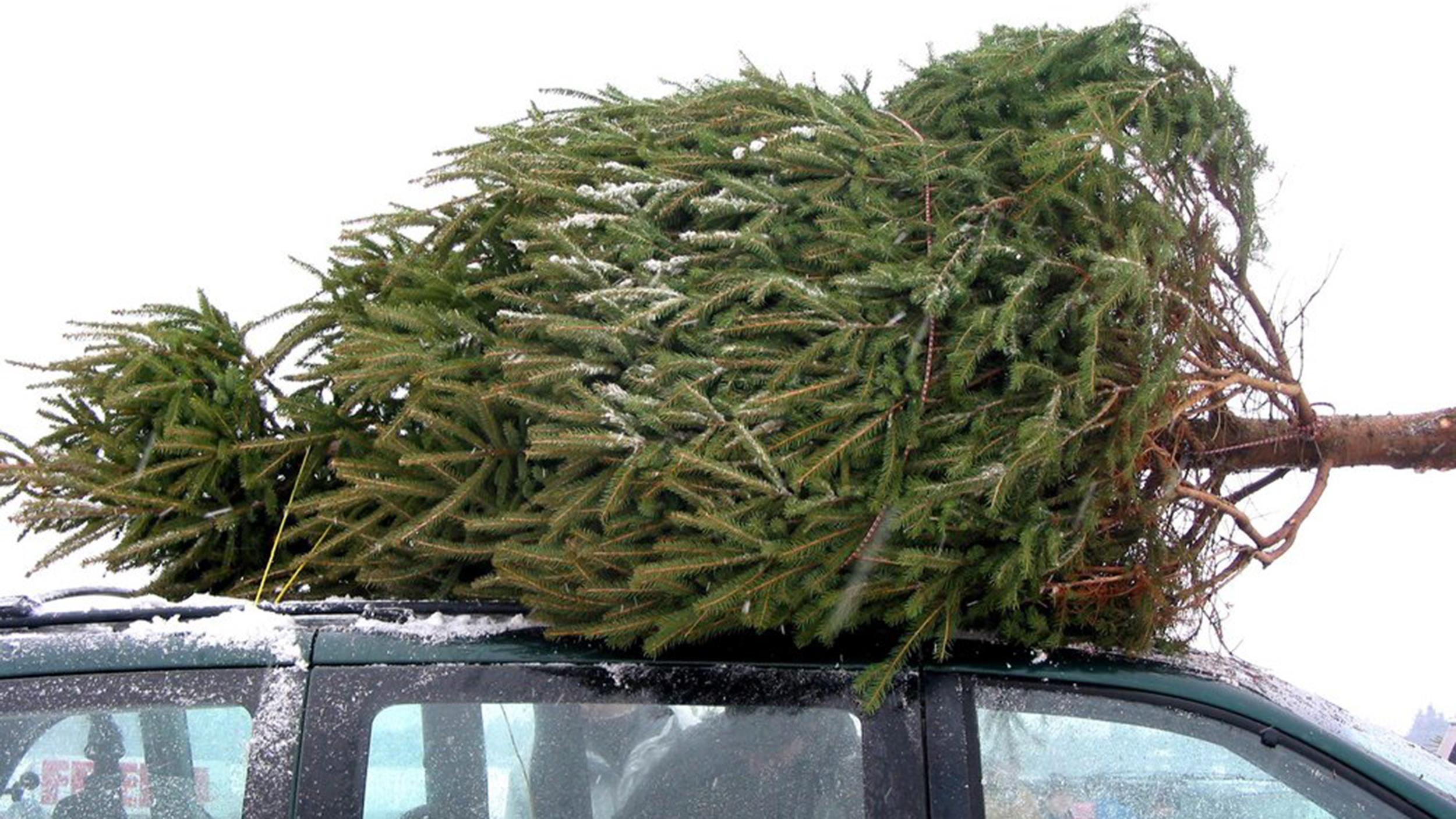 christmas-tree-today-160303-tease-01_efd01931b0ef0ed34b9e2b97df7ba3ad.jpg