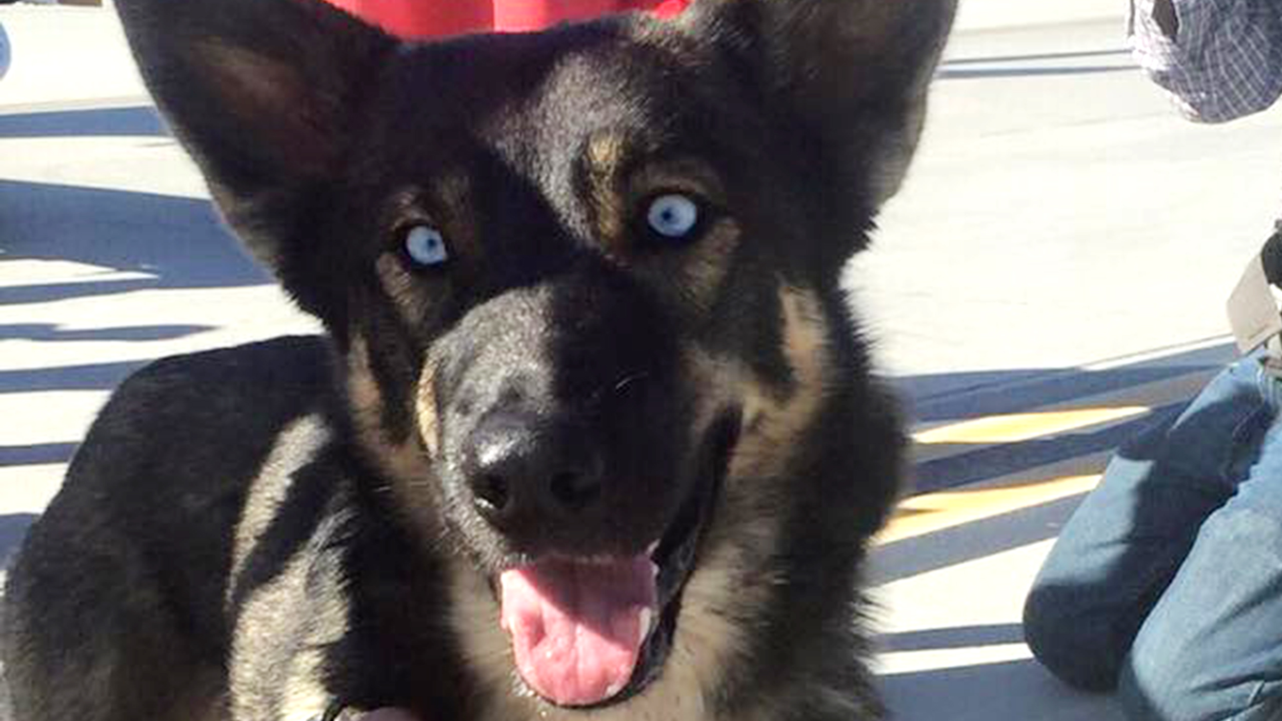 Puppy Rescued By Us Navy After 5 Weeks Lost At Sea Just