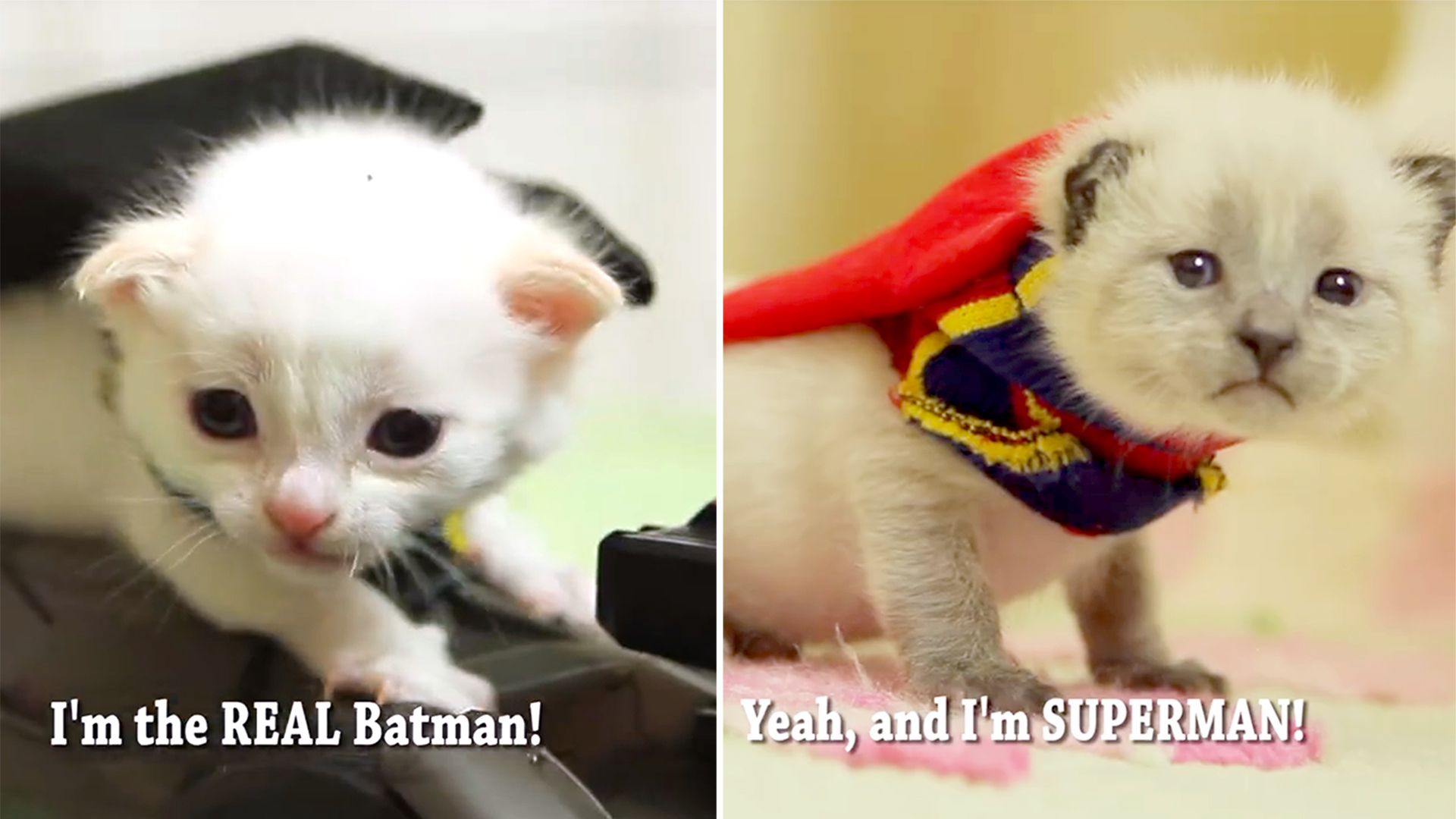 What If Batman And Superman Were Kittens It D Be Super Cute