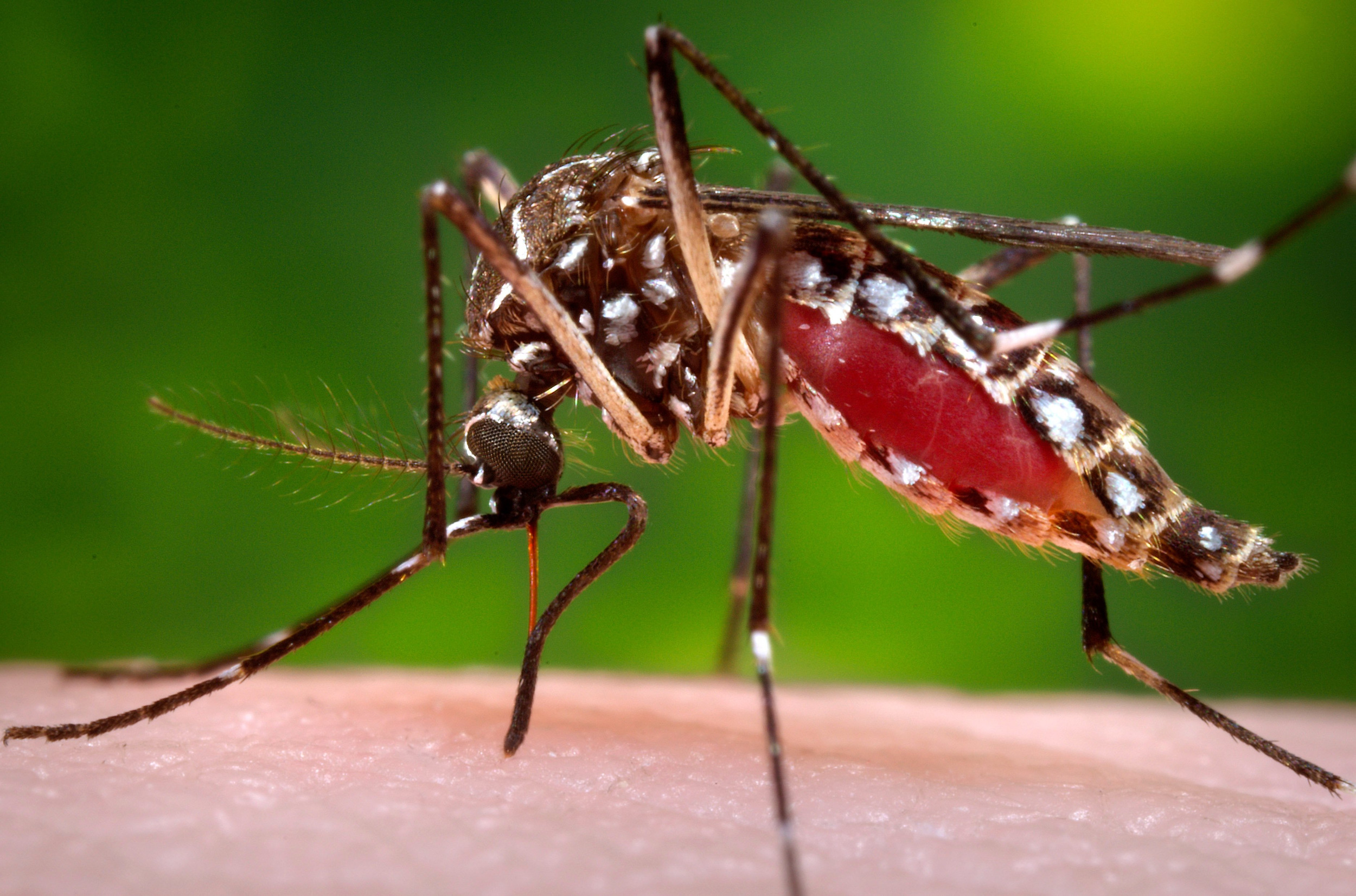 Good Germs Stop Mosquitoes