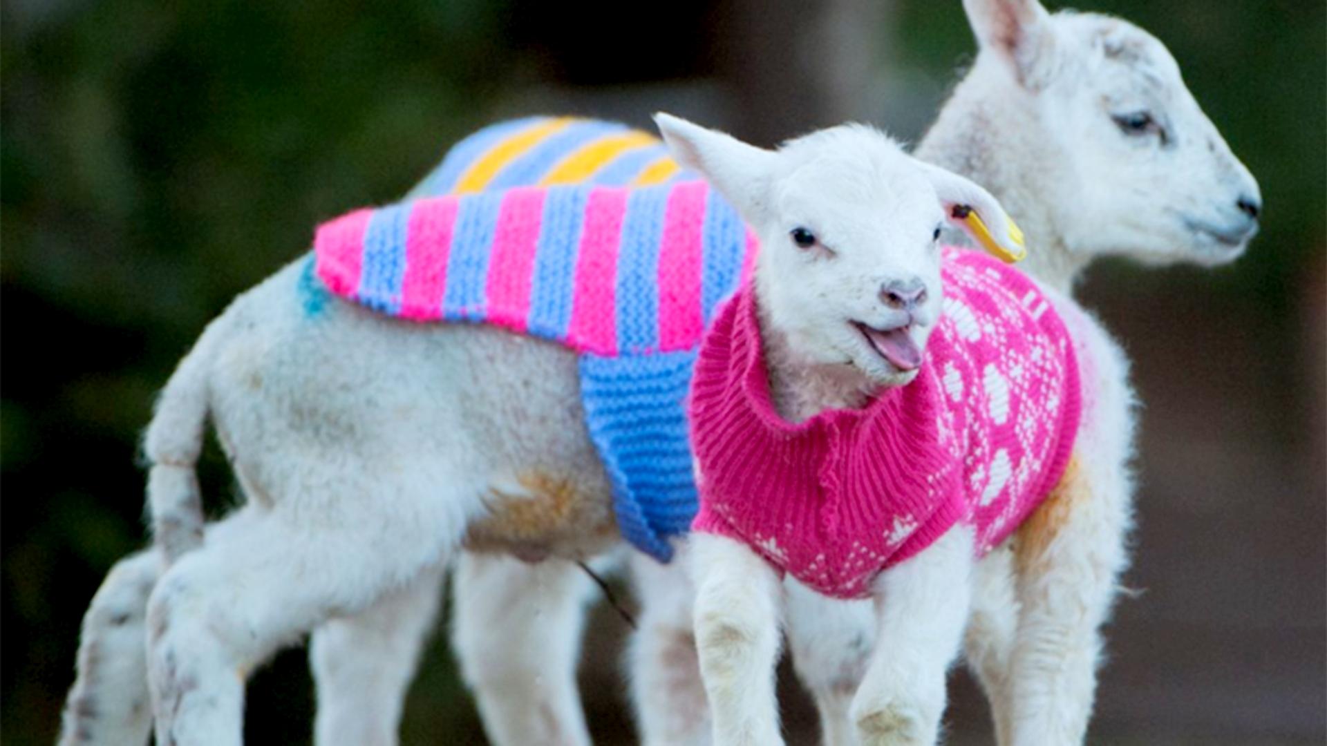 Newborn Sweaters