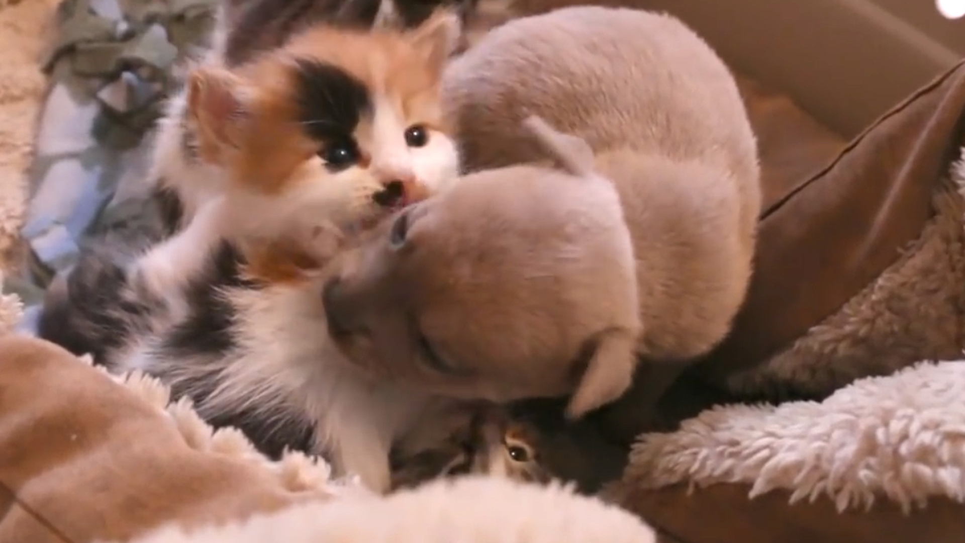 See the abandoned puppy who was adopted by a cat and her litter