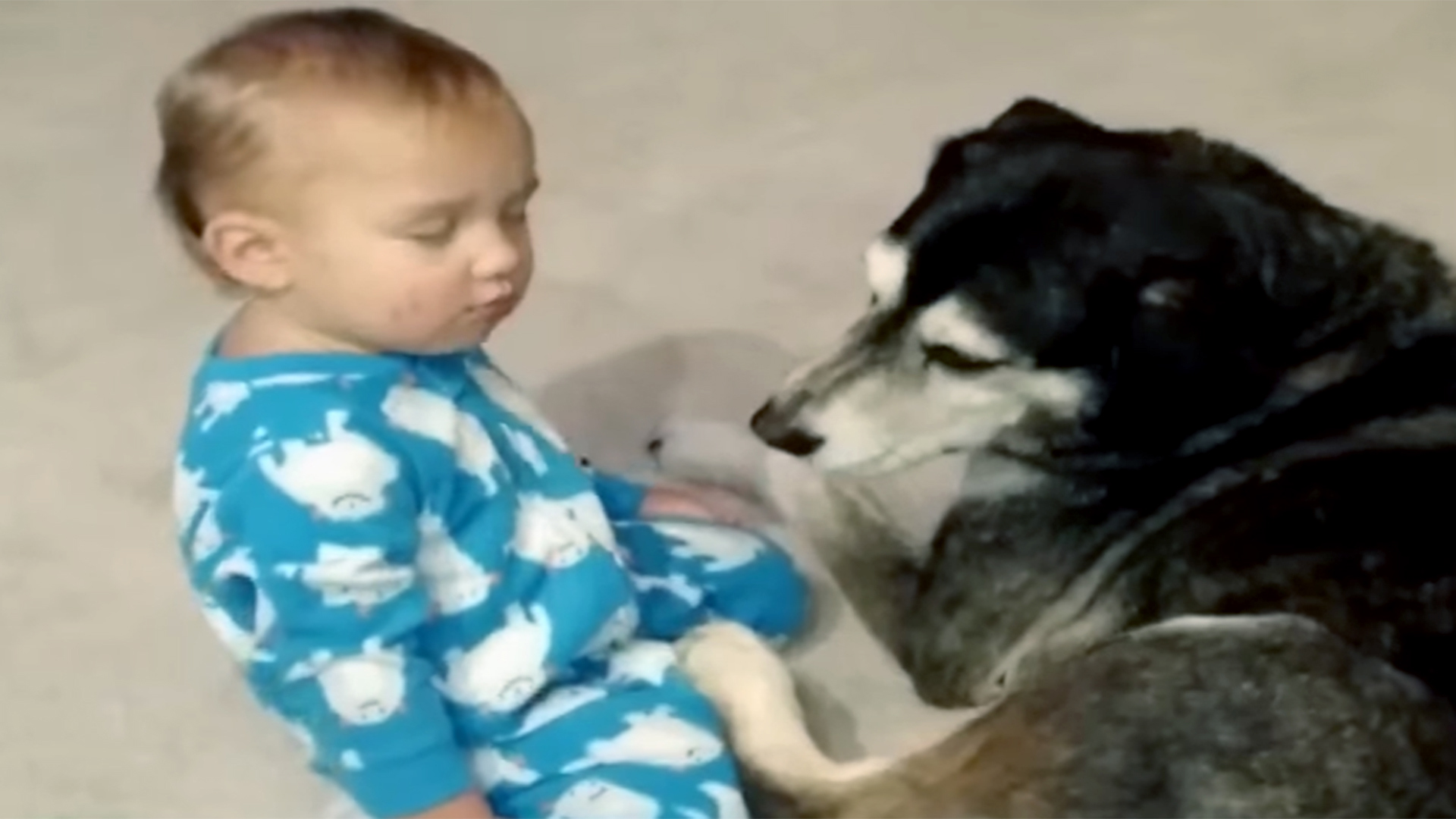 Sleepy baby gets the perfect cuddle buddy watch the adorable video