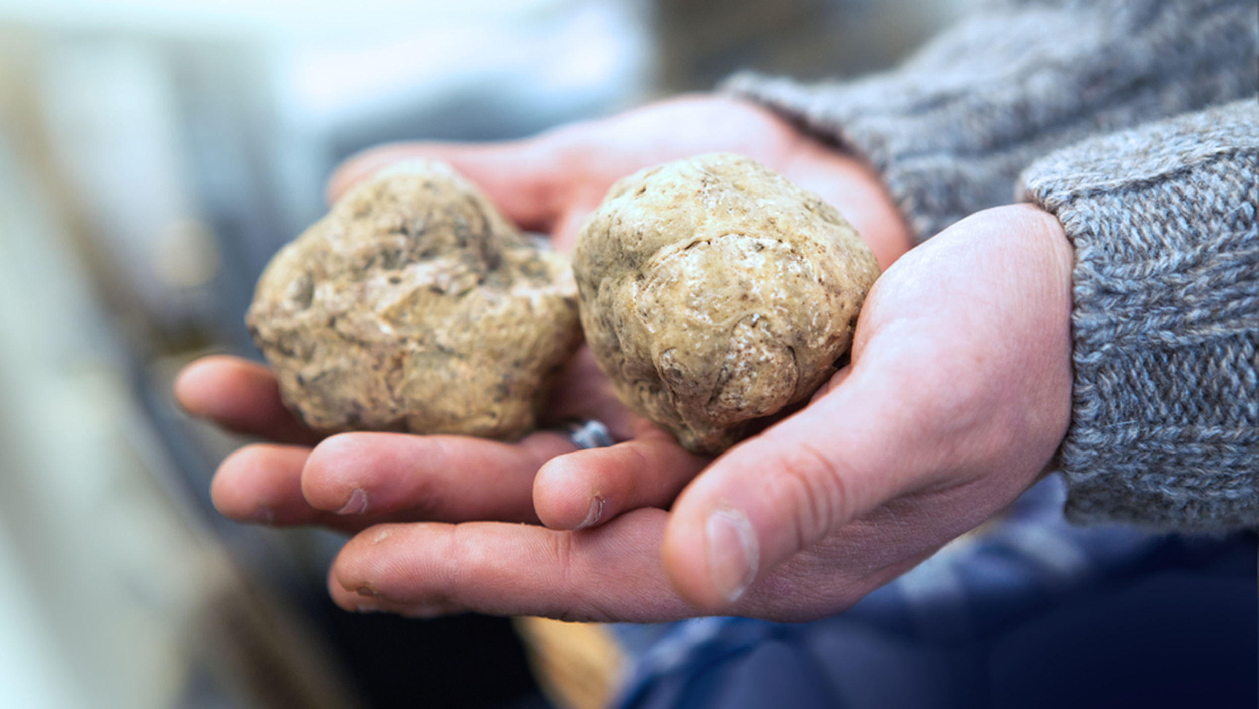 an explanation of the nature and benefits of the truffles Definition of business concept: an idea for a business that includes basic information such as the service or product, the target demographic.
