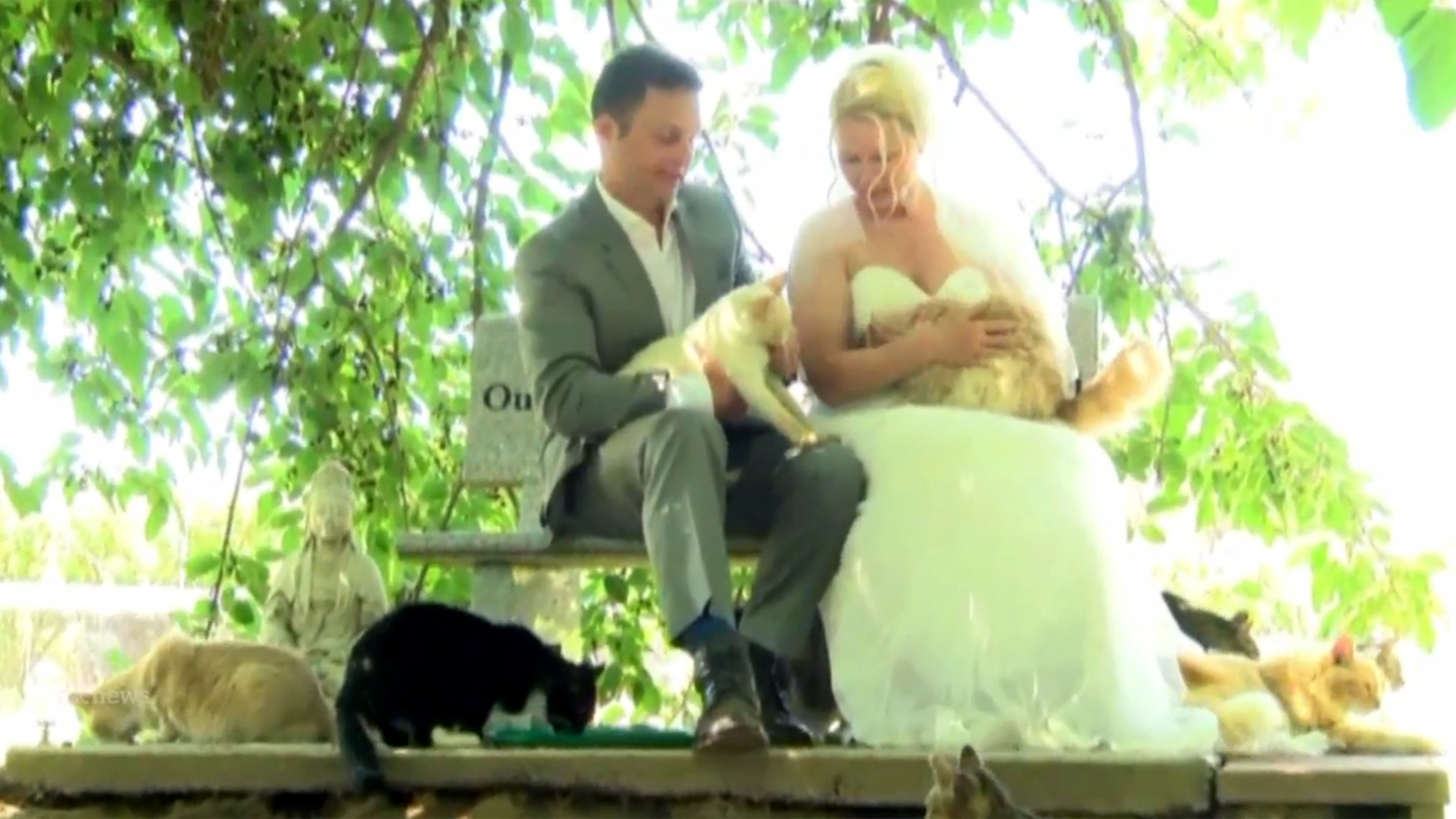 Couple holds wedding at a cat sanctuary with 1100 furry guests junglespirit Images