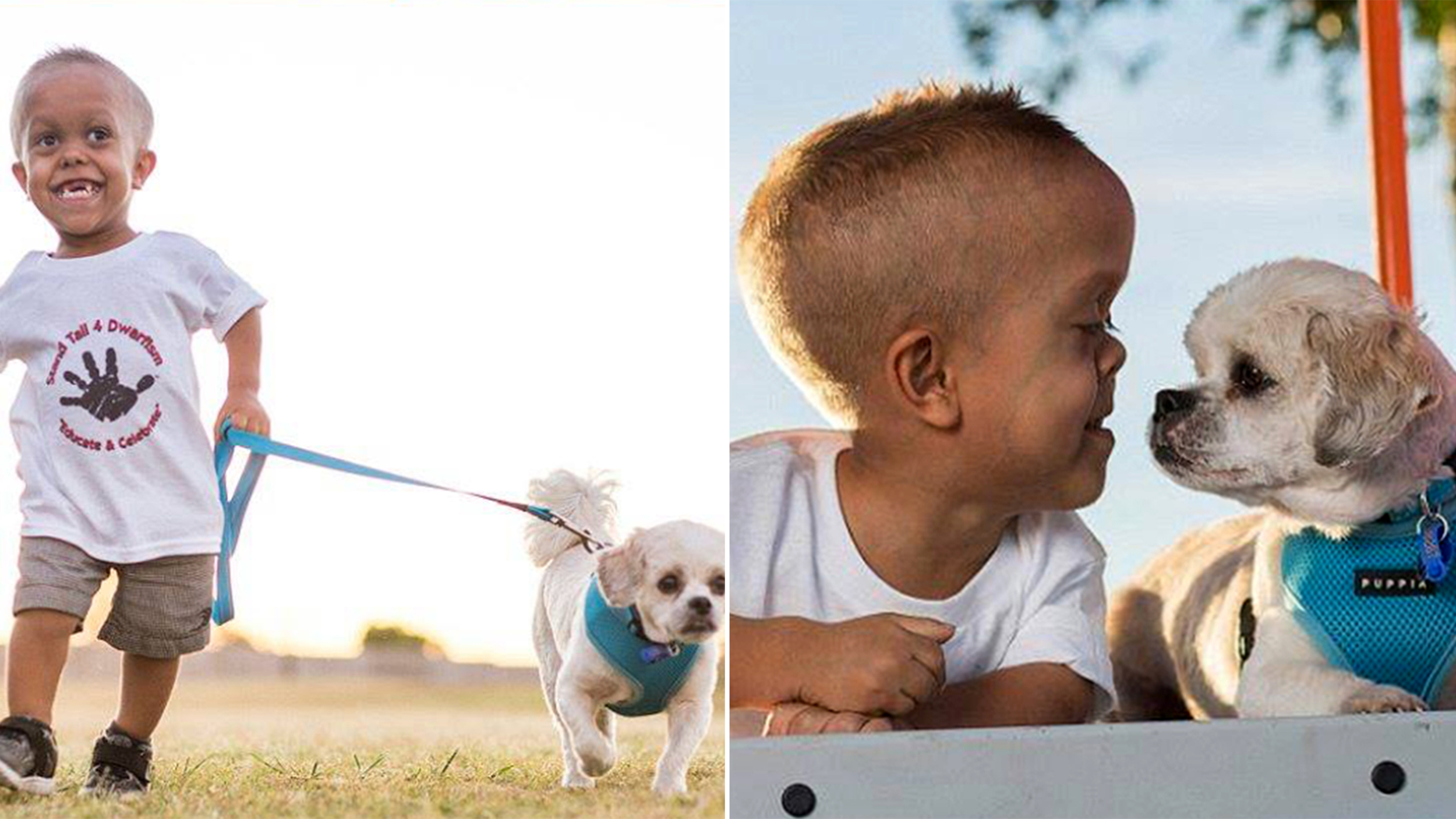 New dog helps 5-year-old boy with dwarfism stand tall to ...