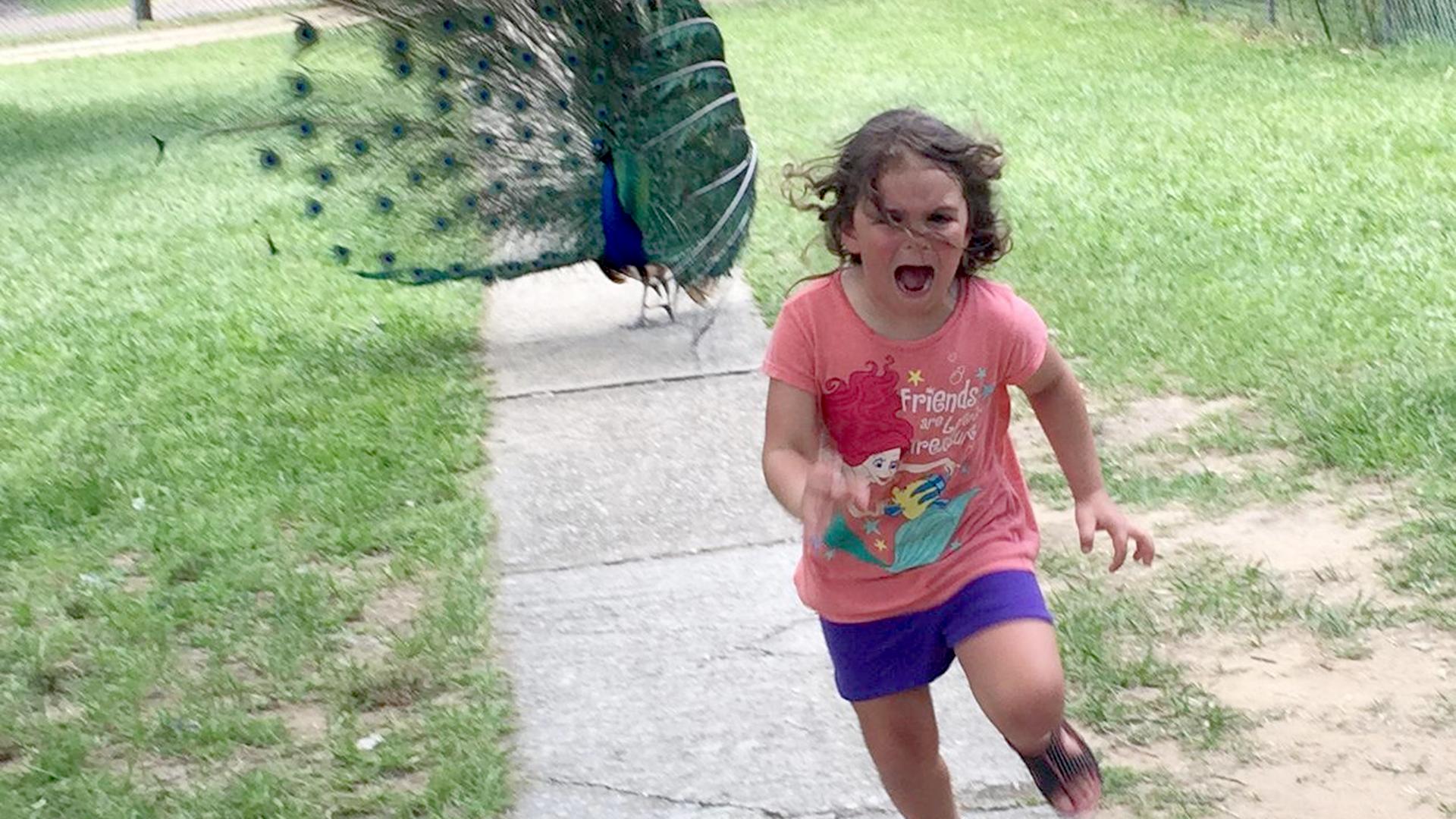Run! Internet has fun ...