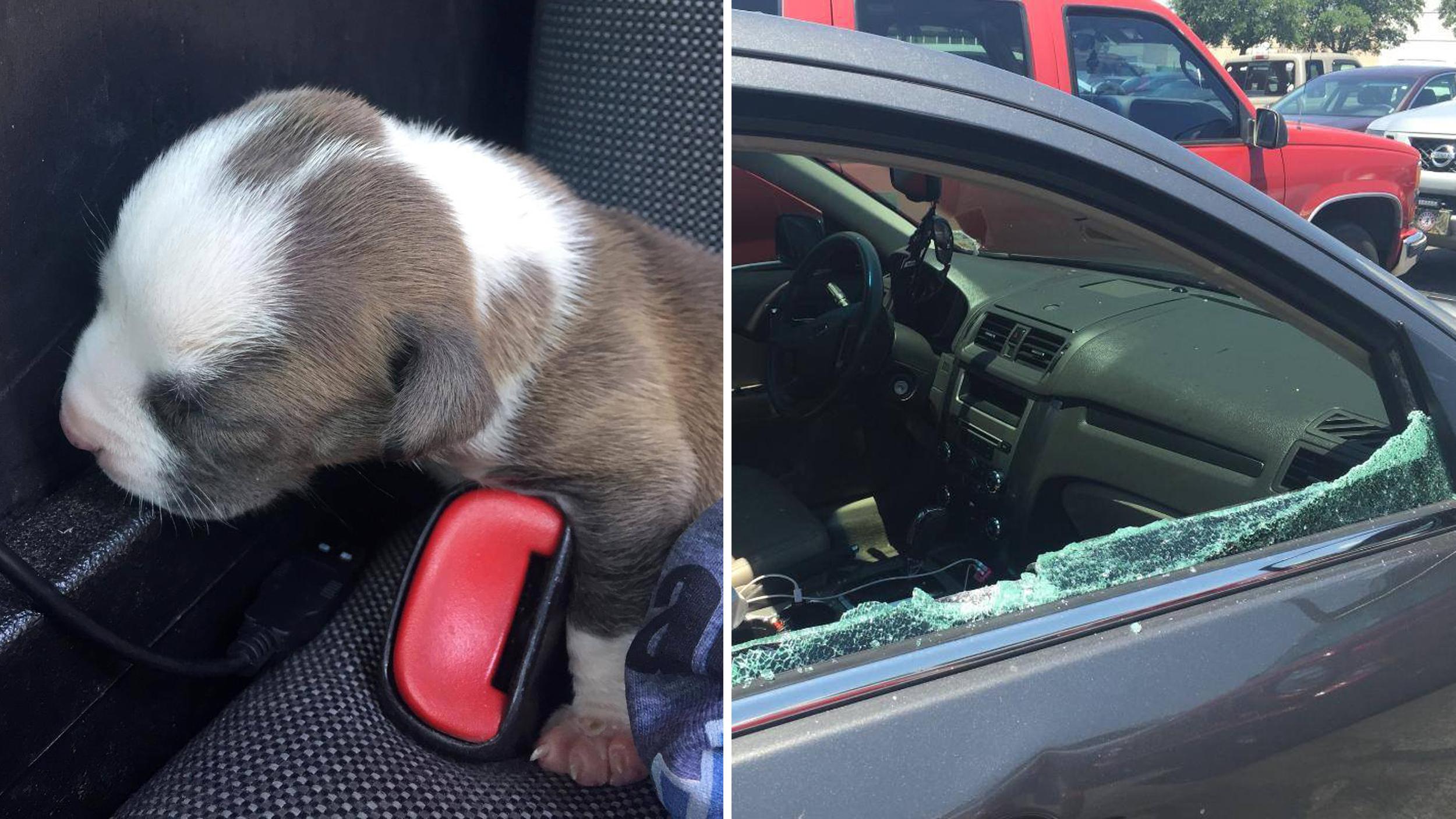 Dog Having Puppies Stuck