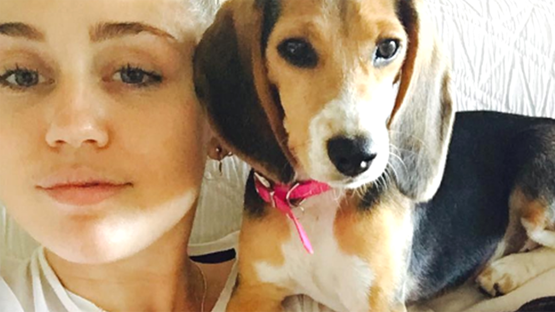 Family Dog Rescue Instagram