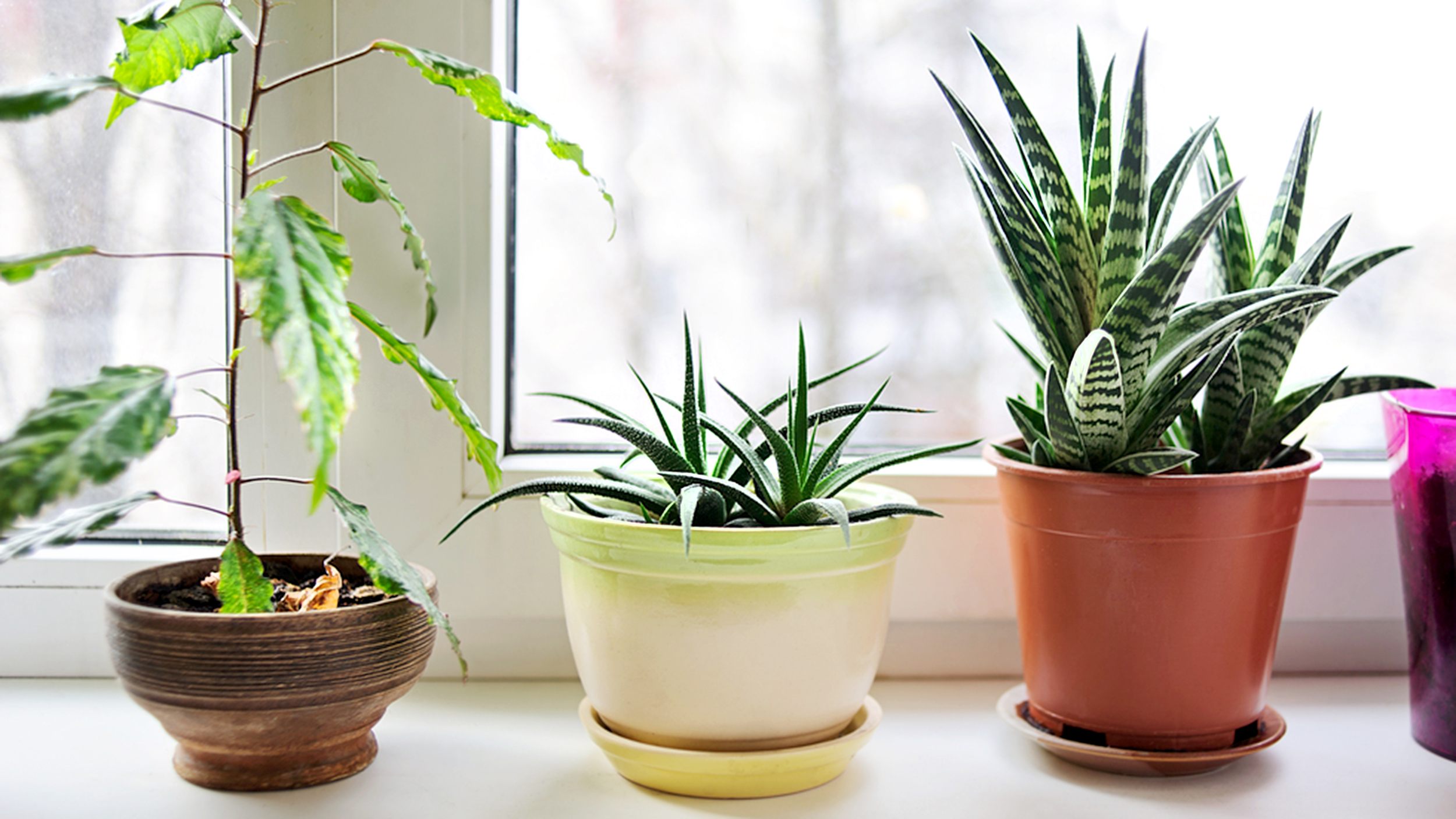 3 Indoor Plants That Actually Clean The Air